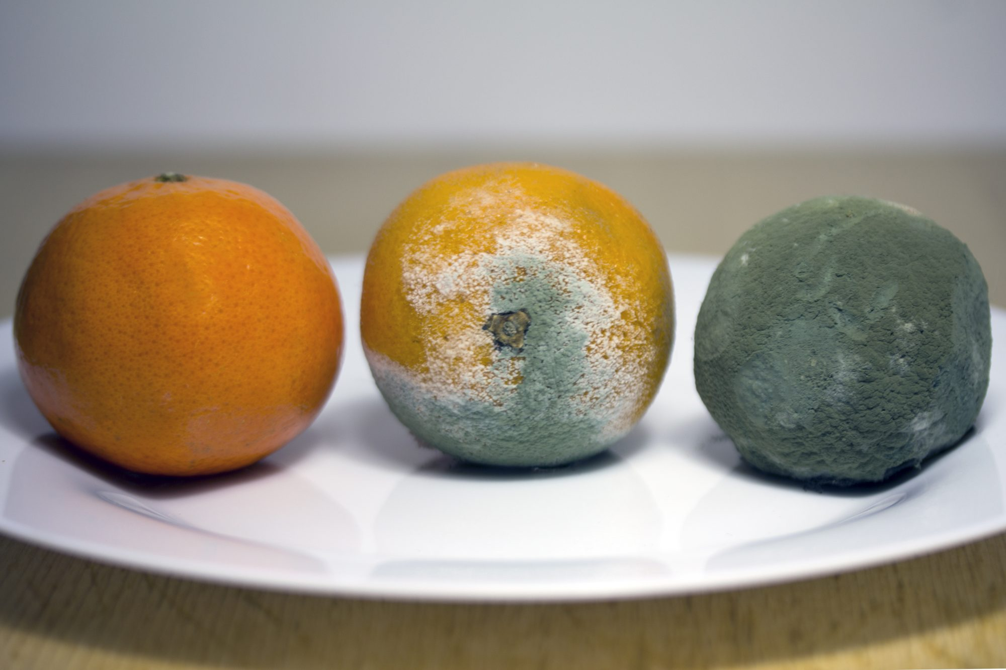 Moldy Oranges Getty 2/18/20