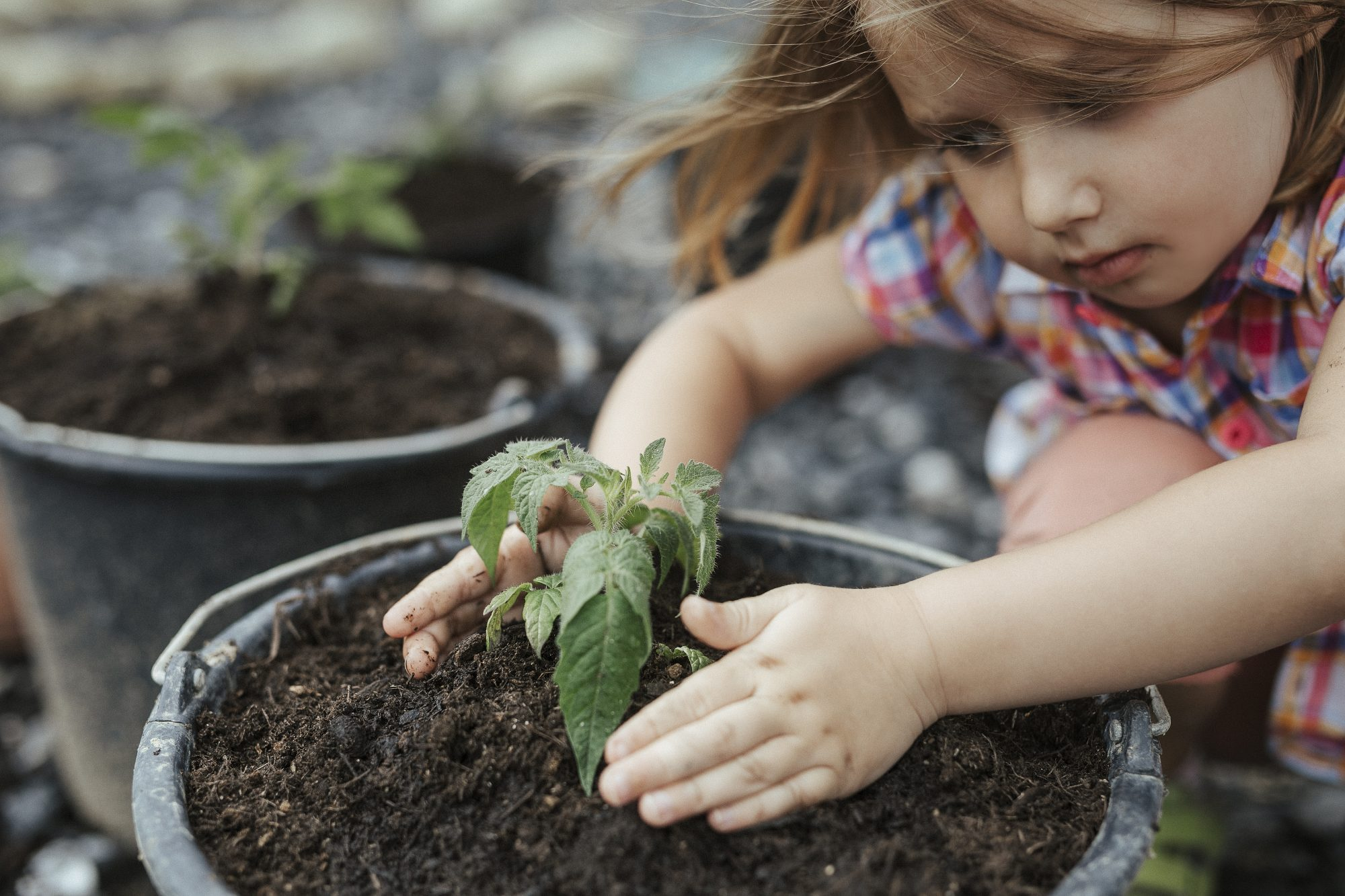 Child planting tomatoes Getty 4/20/20