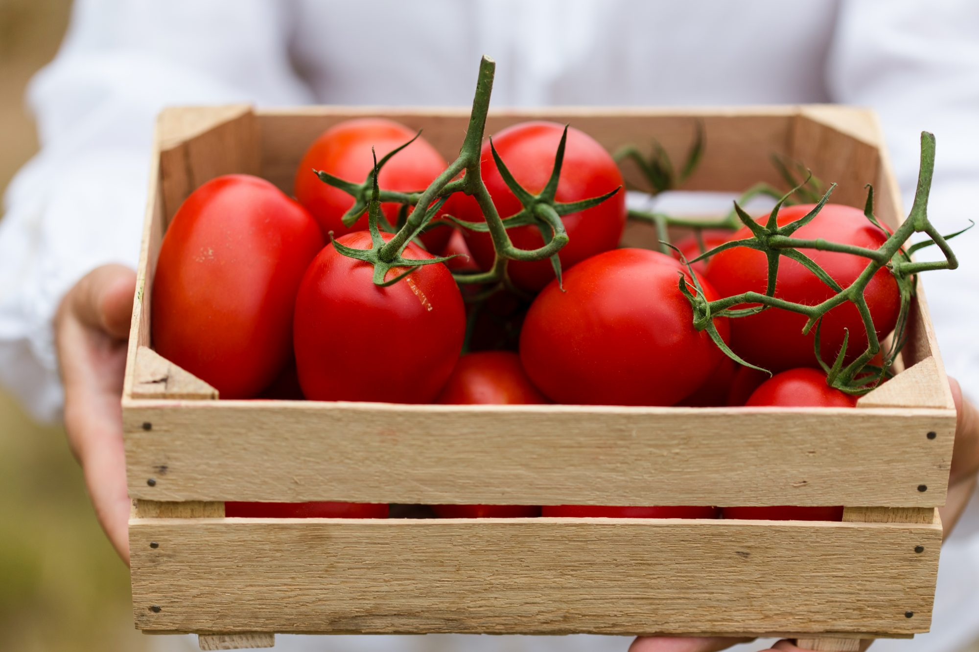 Tomatoes in box Getty 4/20/20
