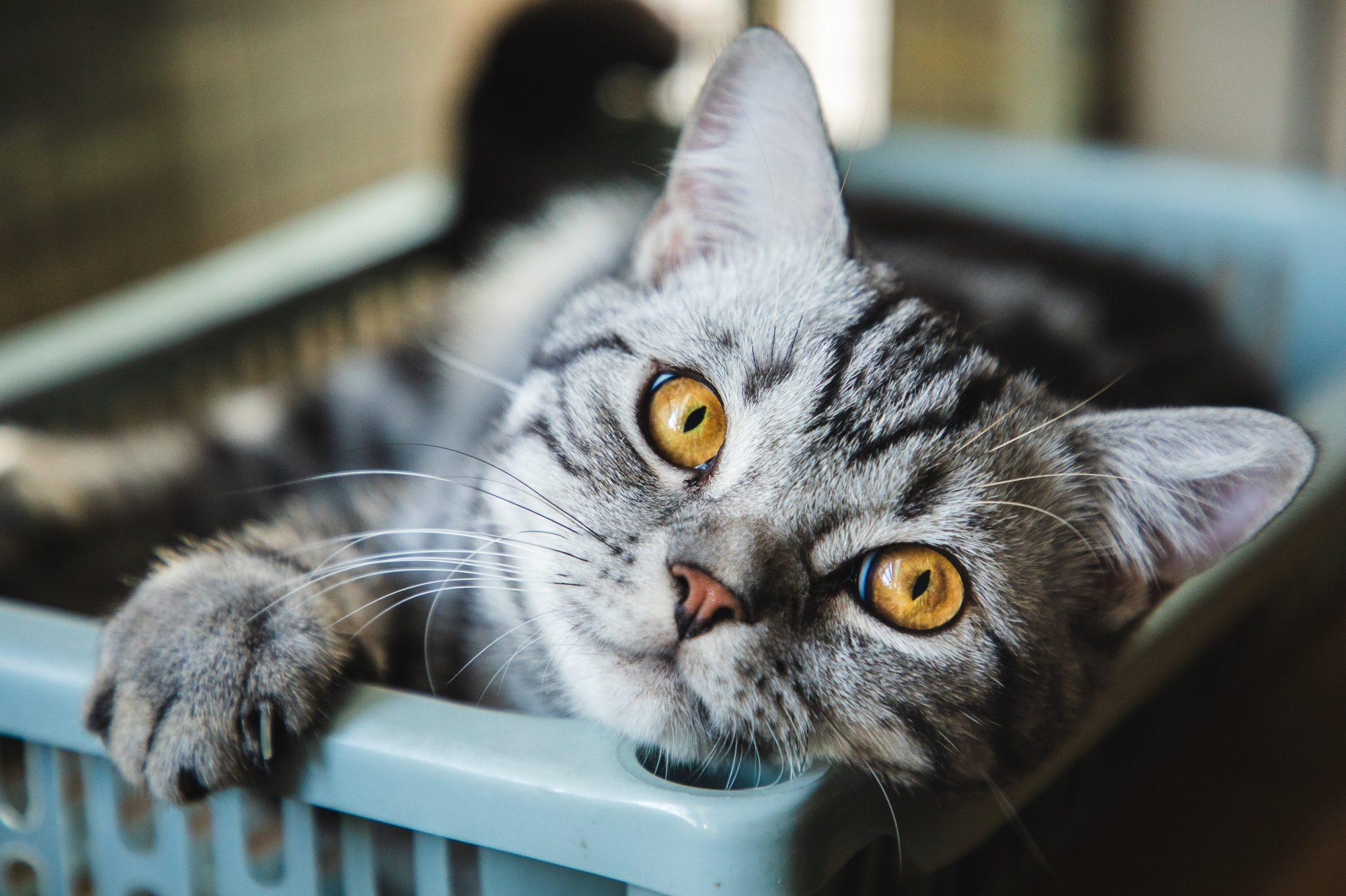 Cat in hamper Getty 8/4/20