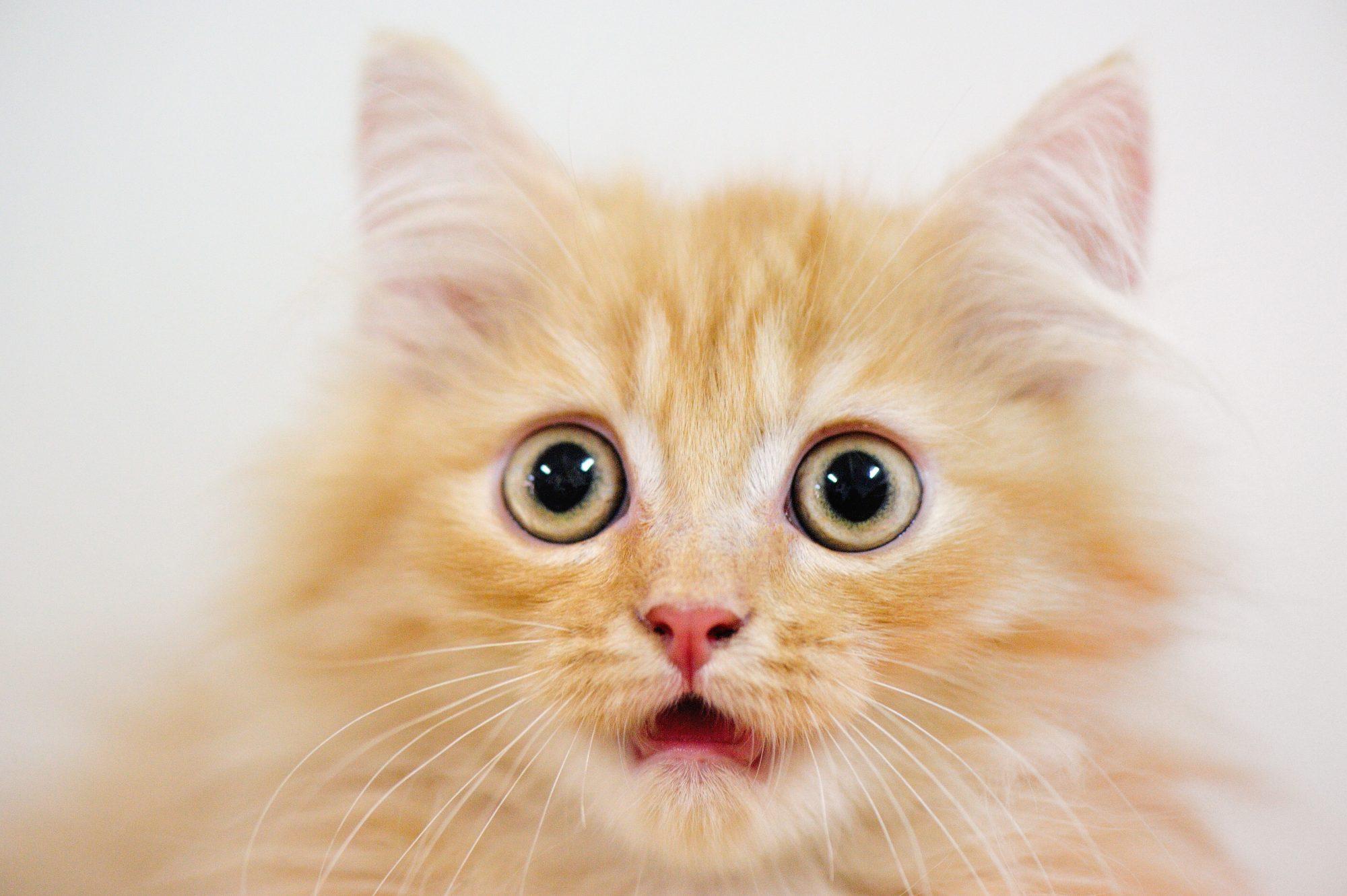 Scared cat Getty 8/4/20