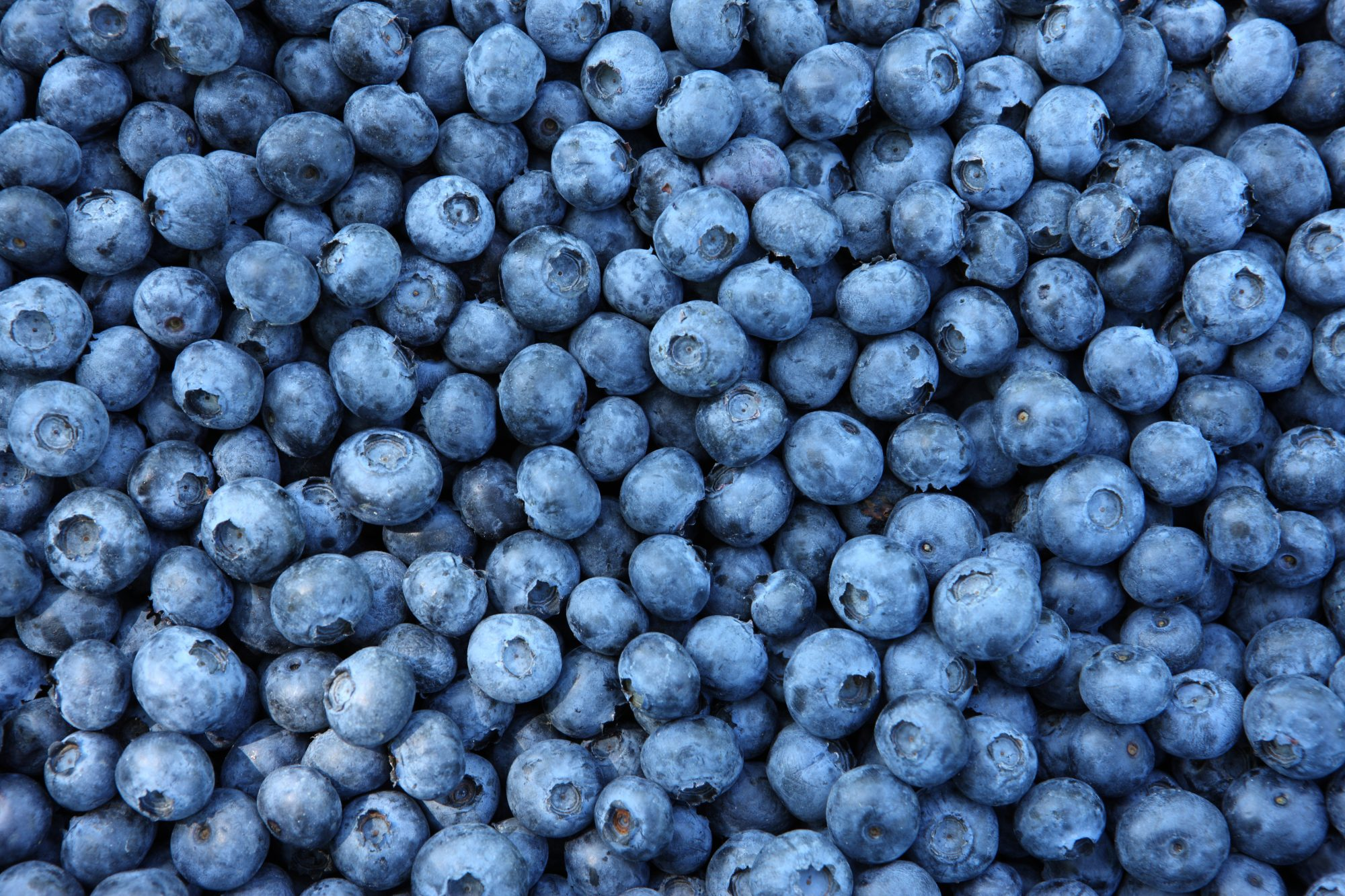 Blueberry Getty 8/10/20
