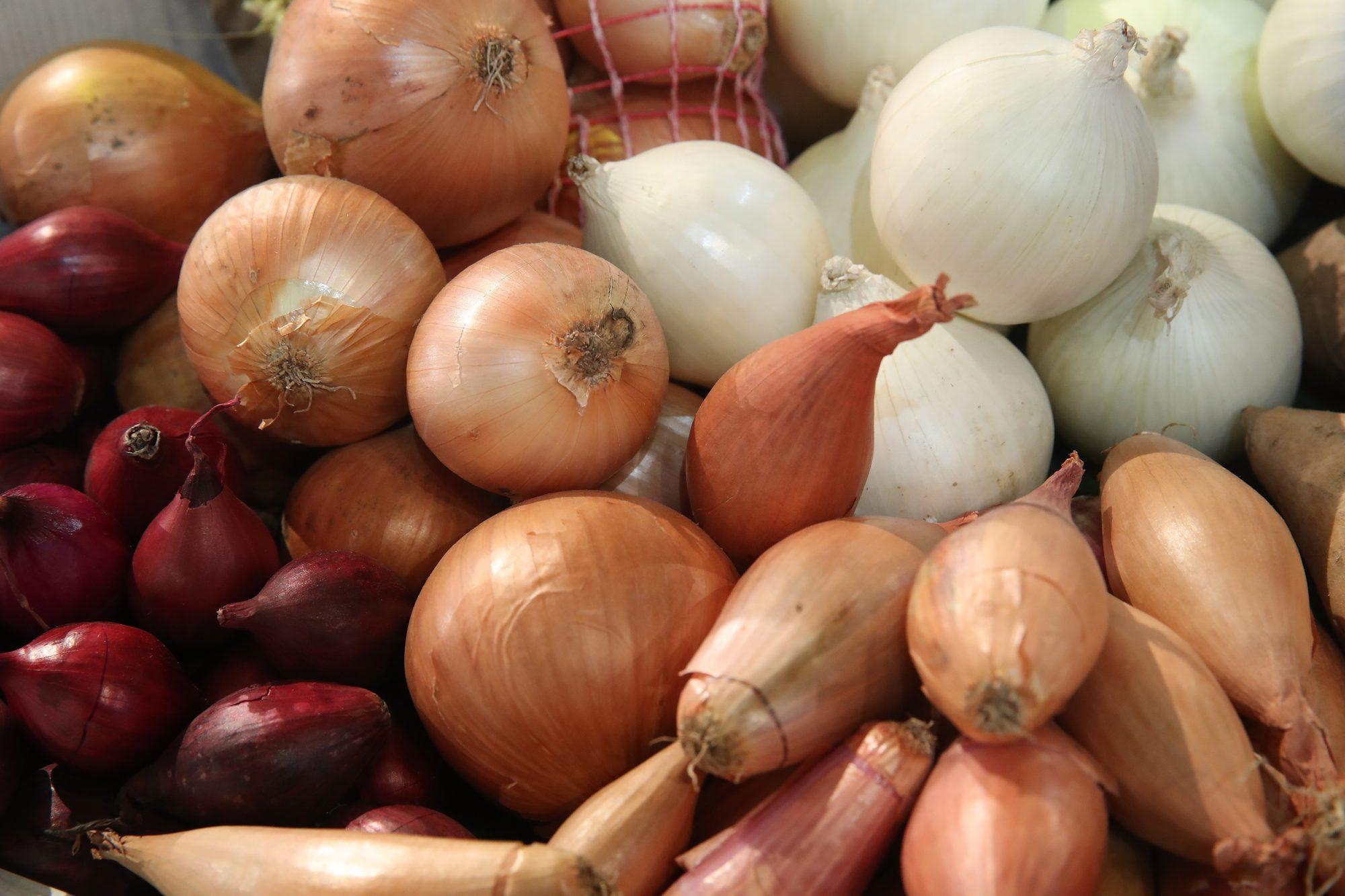 082520_Onion varieties
