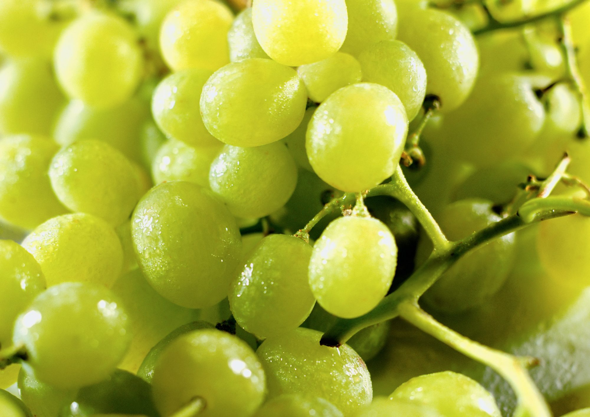 Fresh grapes Getty 8/25/20