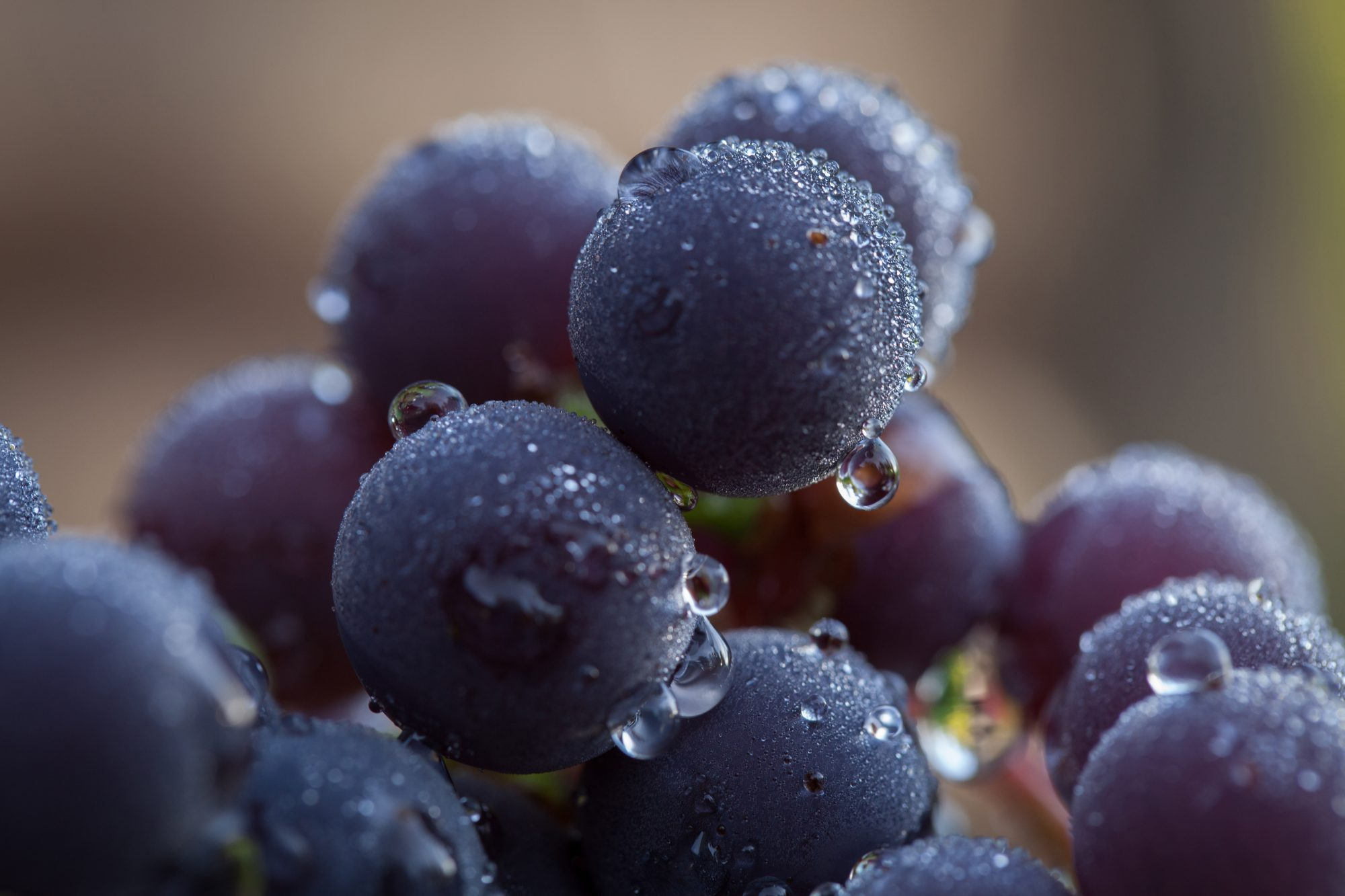 Thawing grapes Getty 8/25/20