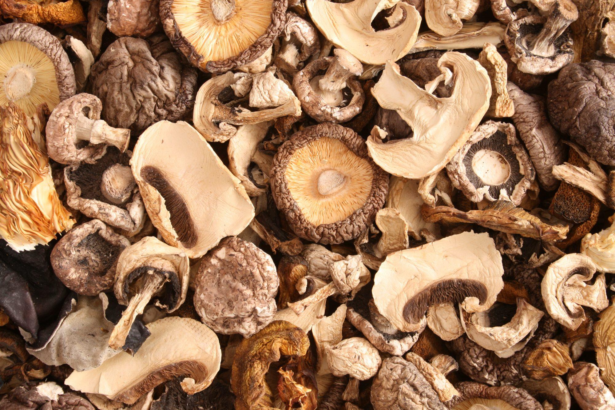 090120_Dried Mushrooms