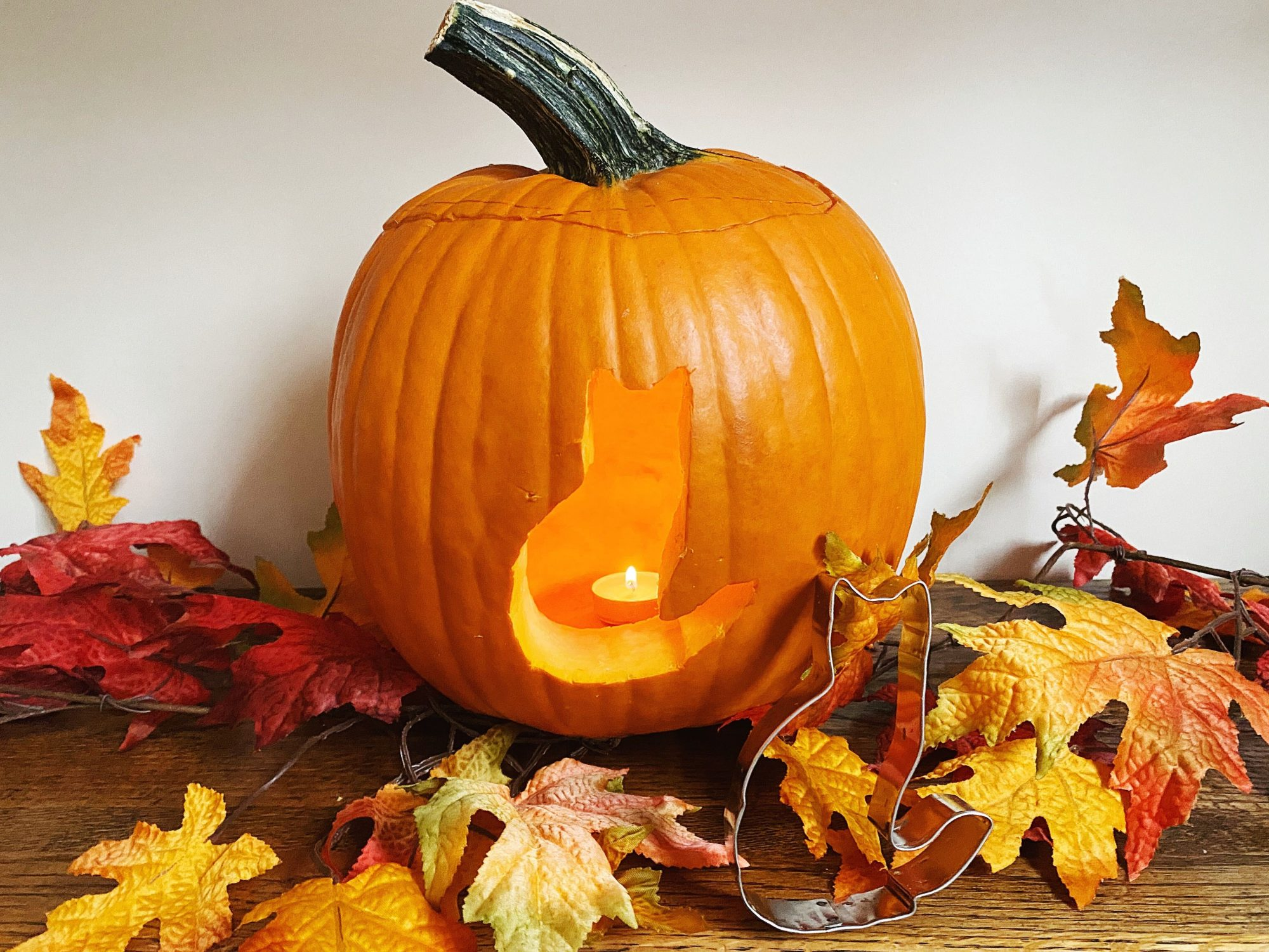 Cat pumpkin tout
