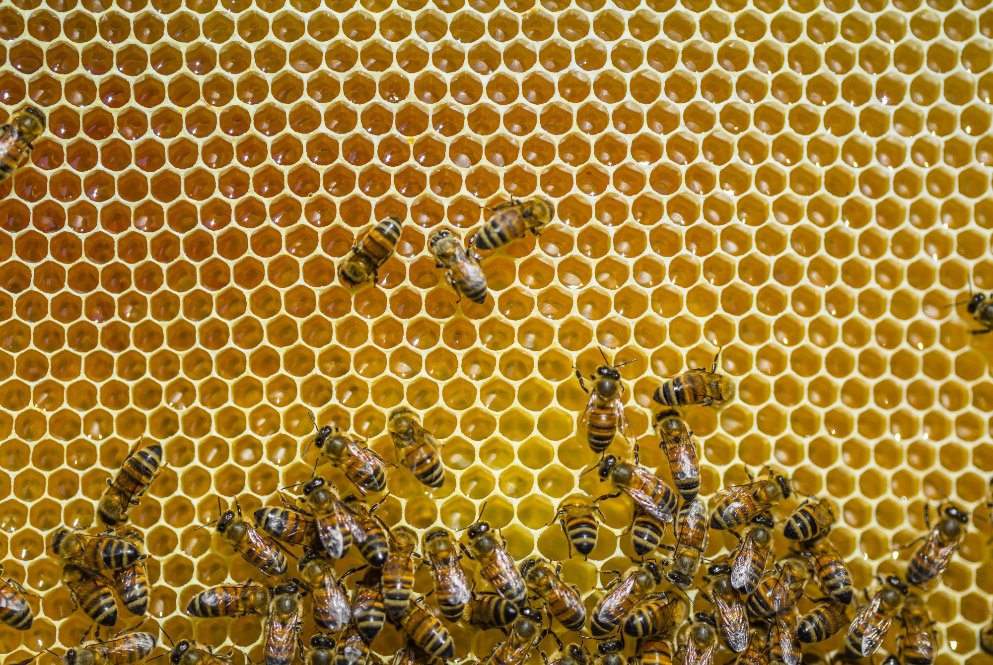 Bees on honey Getty 9/21/20