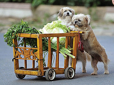 CART-PUSHING CANINES