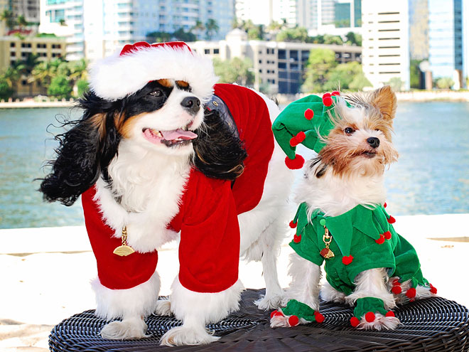 HAVE A BOW-WOW HOLIDAY
