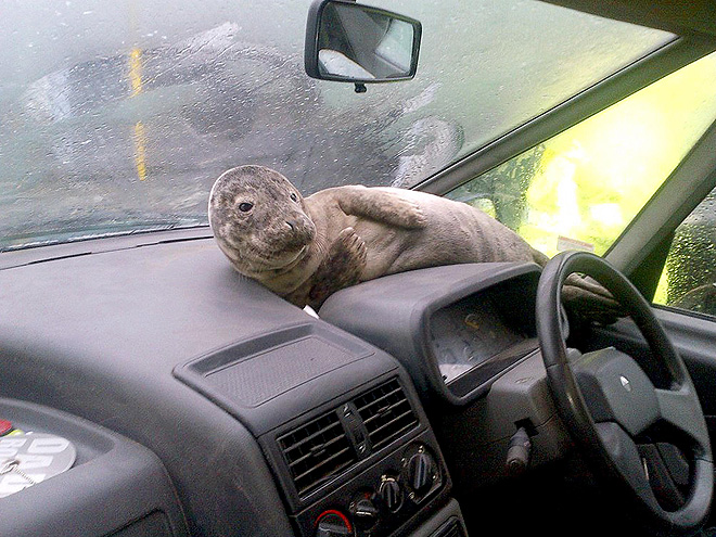 WHERE TO, SEAL?