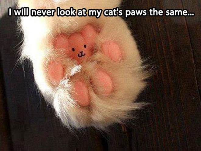 PICTURE PAW-FECT