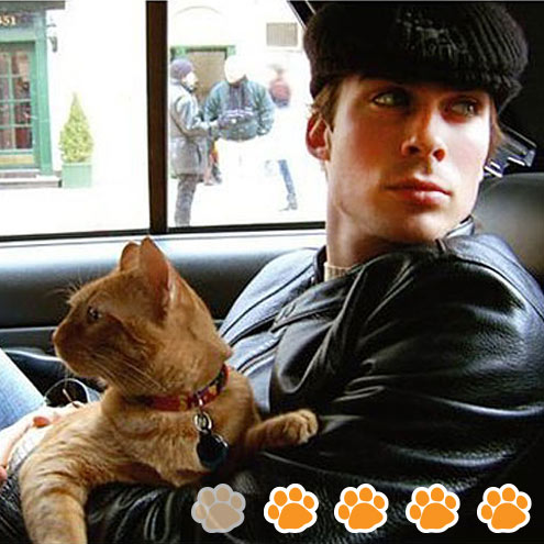 ROUND 3: MOST CHARMING CAT CARRIER