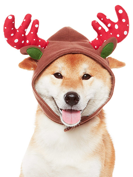 FOR THE MOST FESTIVE FURBALL EVER