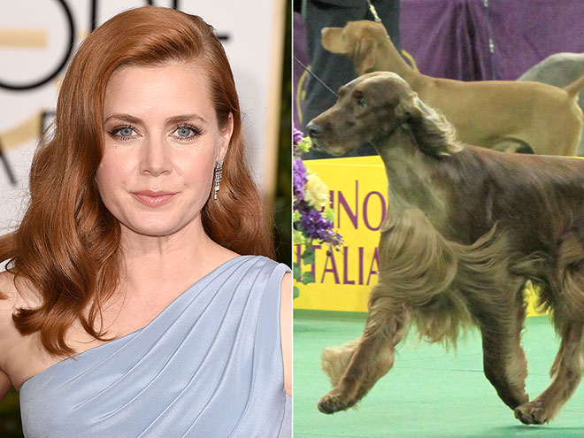 AMY ADAMS & IRISH SETTERS
