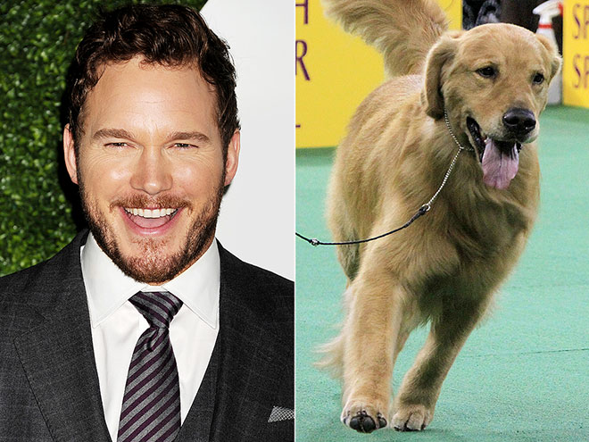 CHRIS PRATT & GOLDEN RETRIEVER