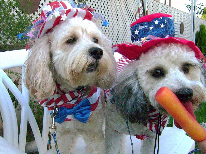 YANKEE DOODLE DOGS