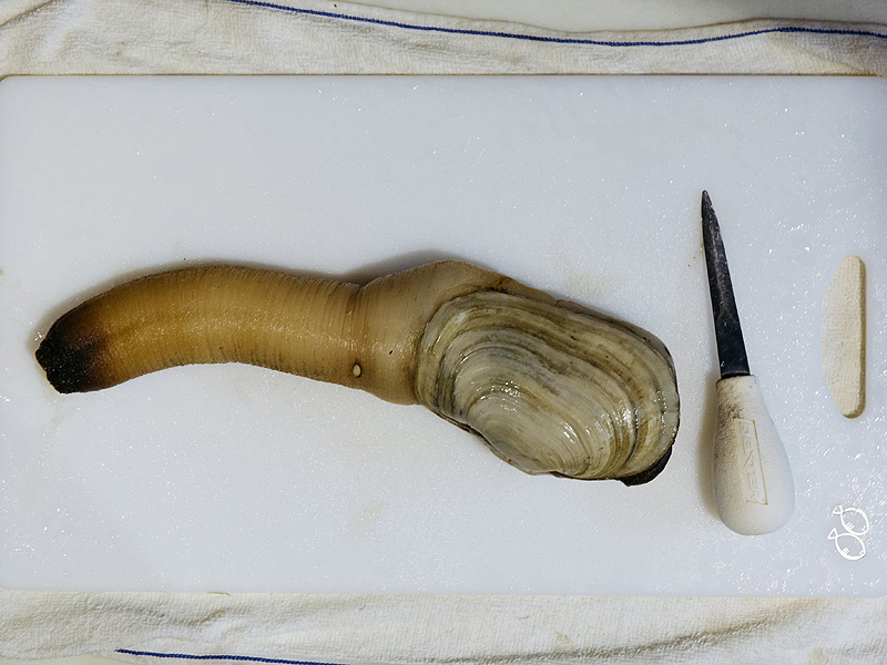 A geoduck sits on a chopping board at the Taylor Shellfish Farms restaurant in the Sai Ying Pun area of Hong Kong, China, on Friday, June 17, 2016. Geoducks are the largest type of burrowing clam. In terms luxury seafood, they can cost more per pound than abalone, and are especially coveted by Chinese consumers who import almost all of Taylor Shellfish Farms' 1 million-pound annual haul. Photographer: Anthony Kwan/Bloomberg via Getty Images