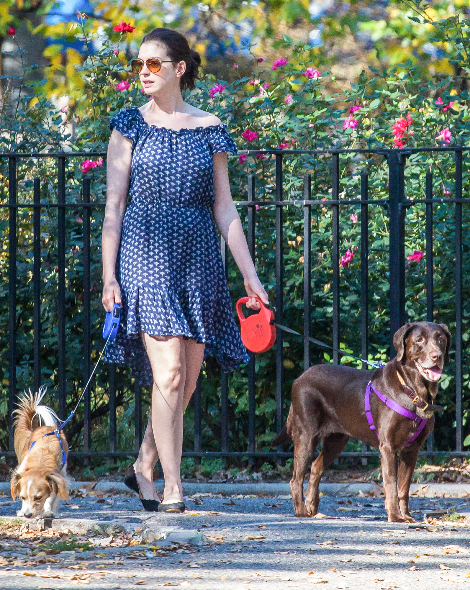 EXCLUSIVE: Anne Hathaway seen walking her dogs at a New York City park