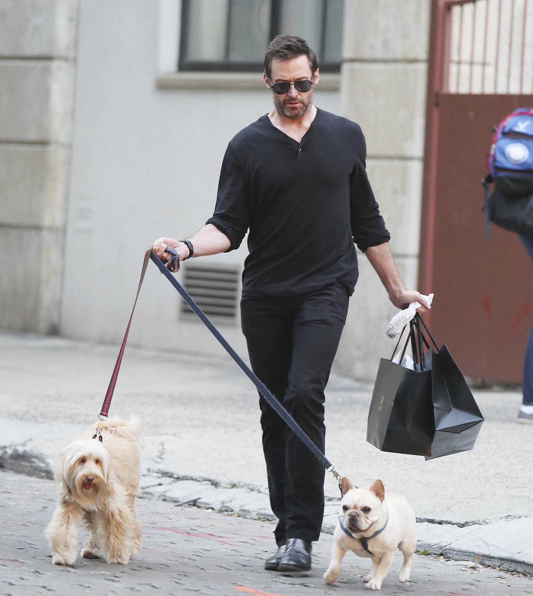 Hugh Jackman Shopping With His Dogs