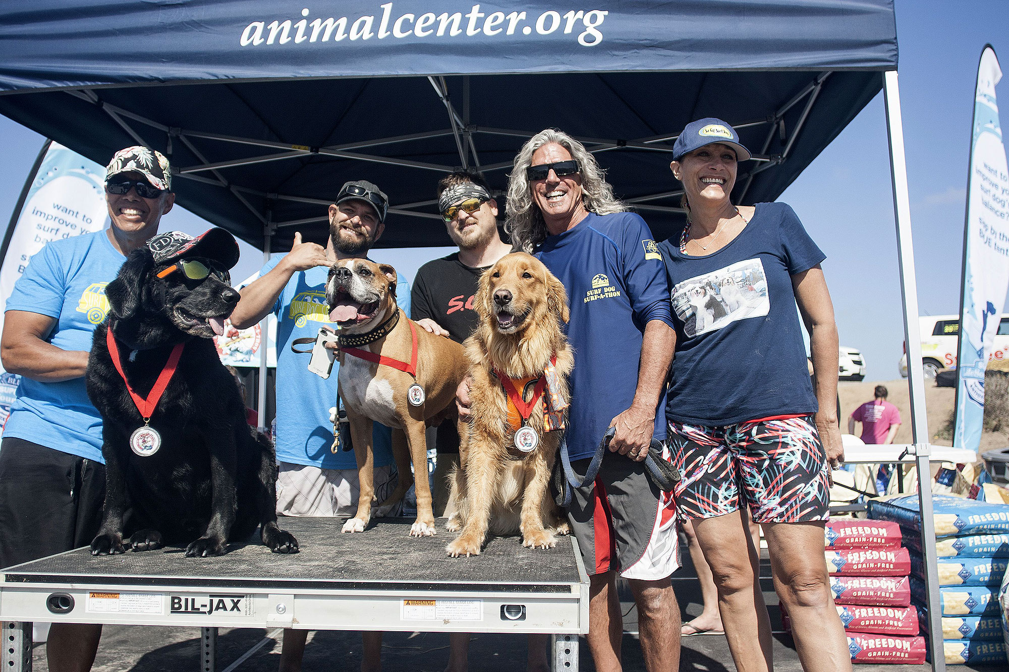 surf-dogs-pets