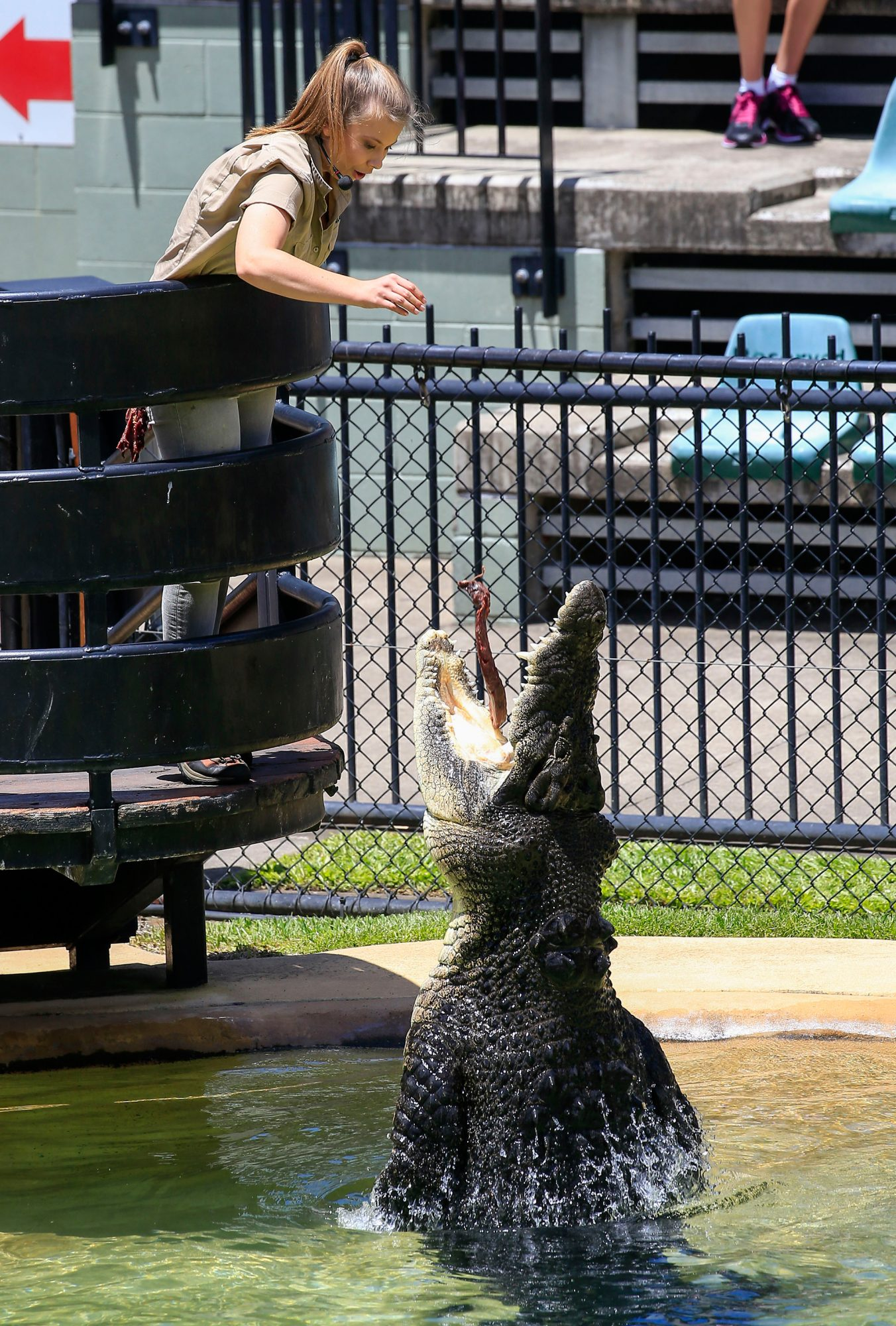 Bindi and Robert Irwin celebrate in their father's memory on Steve Irwin Day at their home, Australia Zoo on November 15, 2016 in Queensland, Australia. Terri Irwin led the family in a crocodile show, with both Bindi and Robert getting hands on with crocs. Bindi's boyfriend Chandler Powell was on the sidelines helping out too. Pictured: Bindi Irwin Ref: SPL1384483 151116 Picture by: Splash News Splash News and Pictures Los Angeles: 310-821-2666 New York: 212-619-2666 London: 870-934-2666 photodesk@splashnews.com