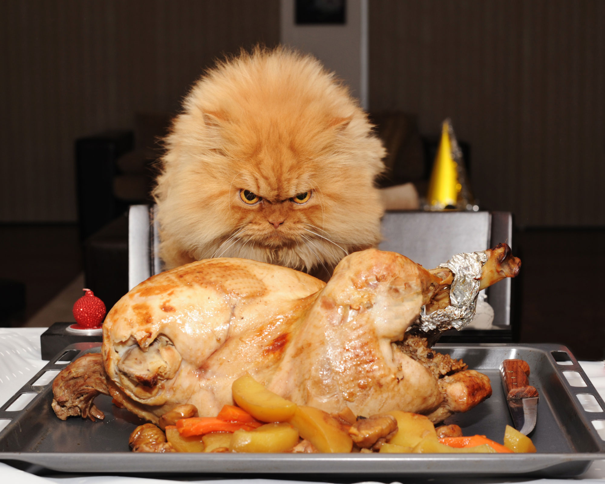 cat turkeyCredit: Getty Images/Flickr RF