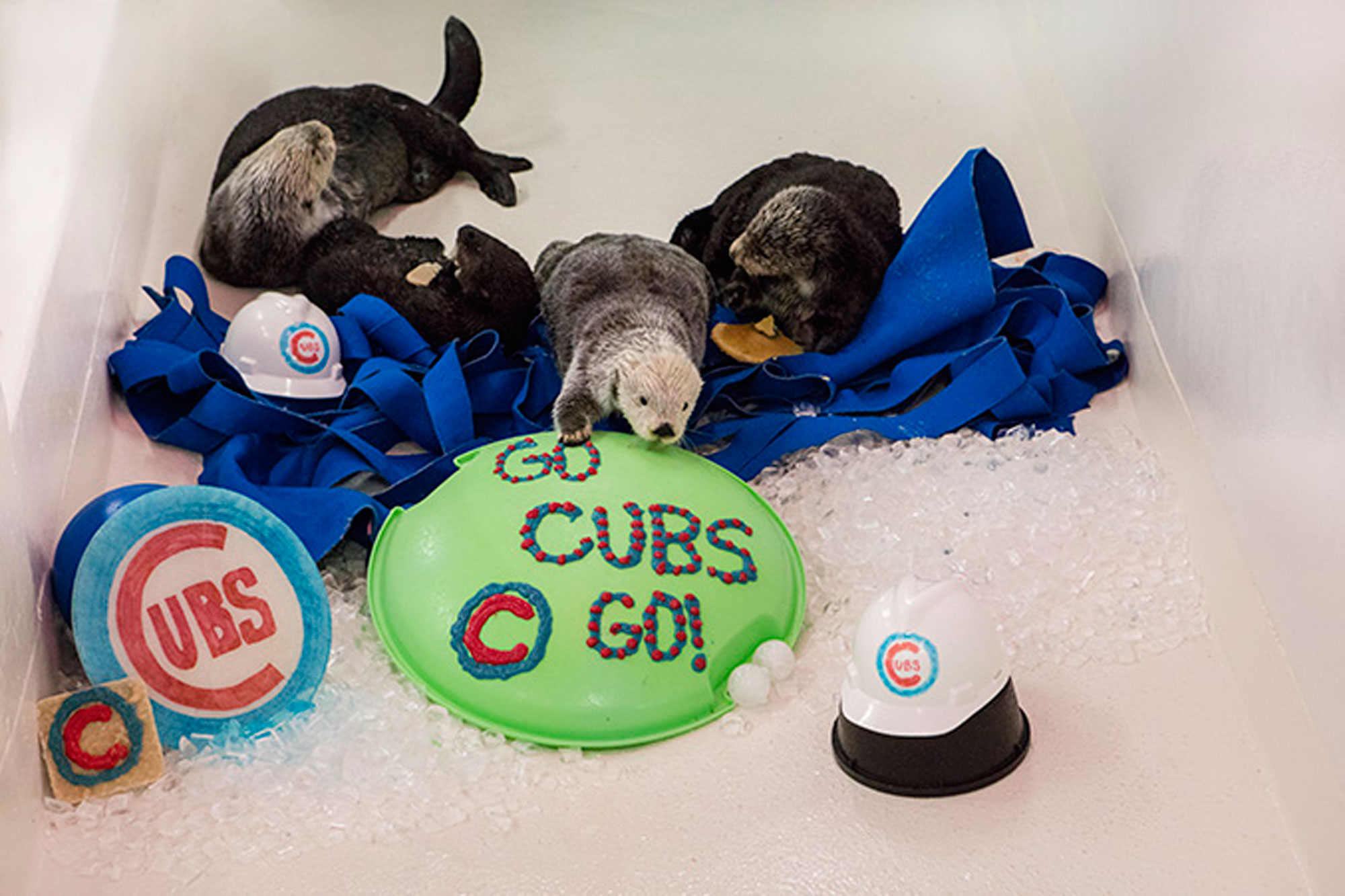 cubs-otters-3