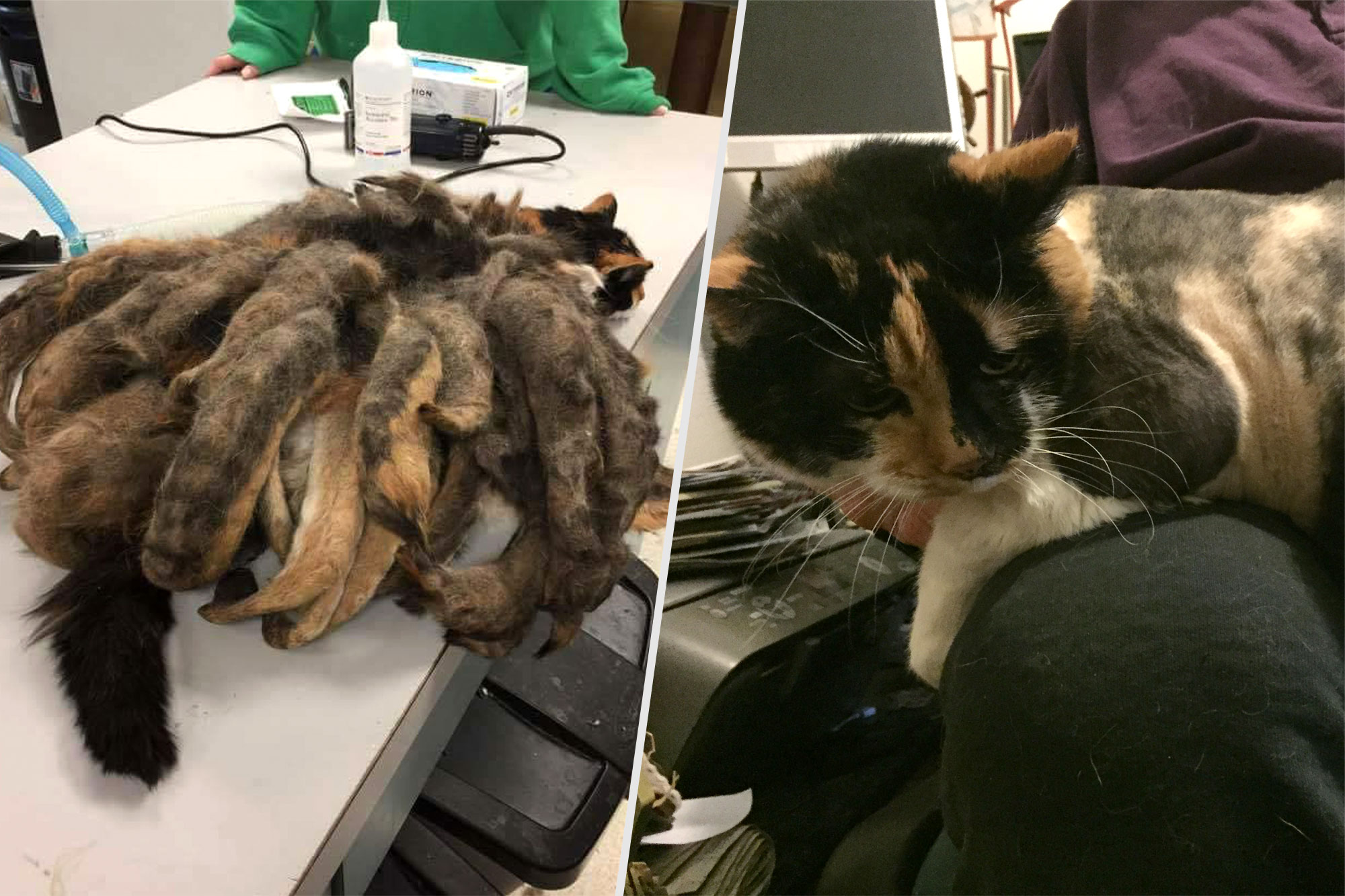 matted-cat