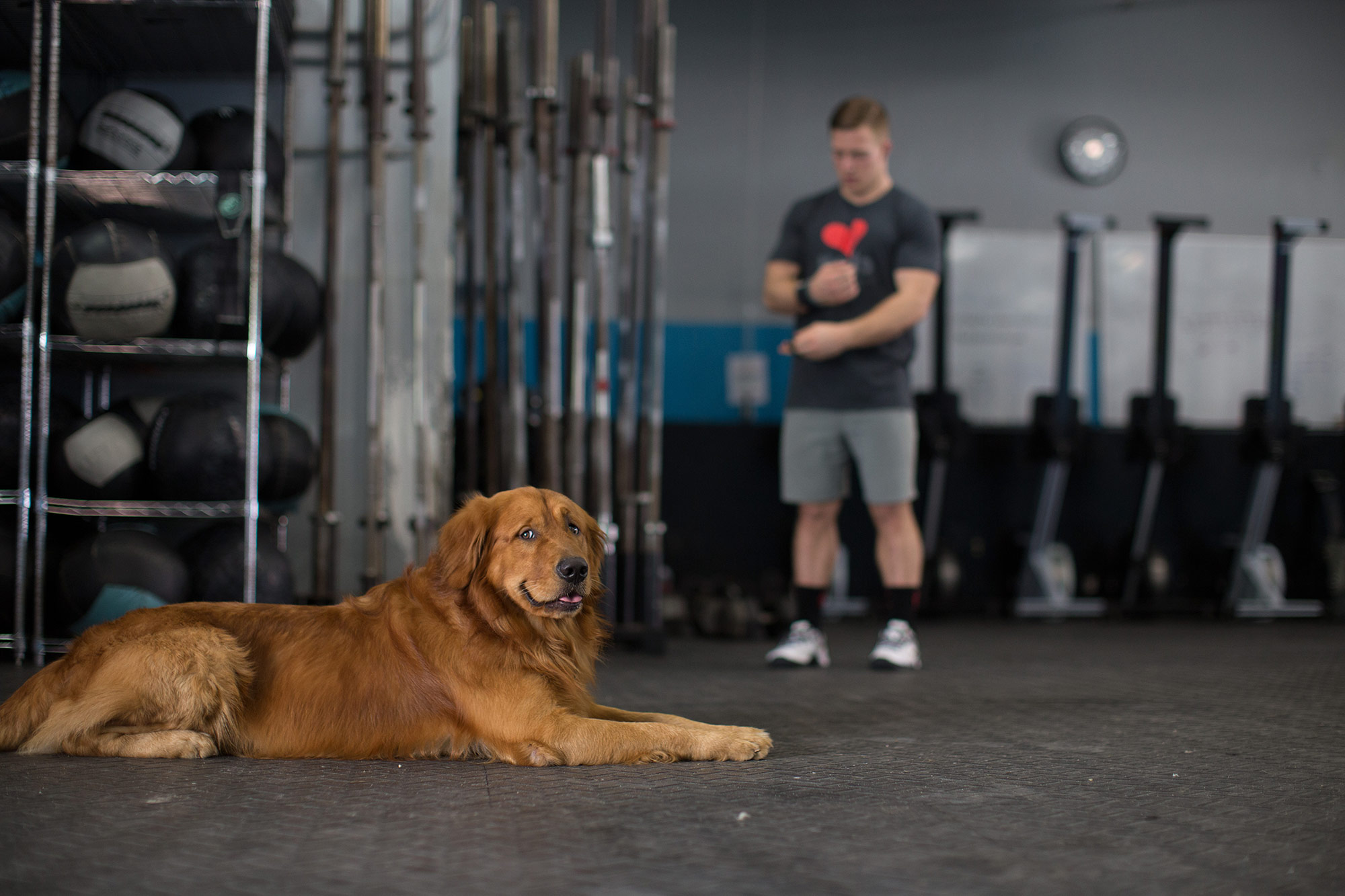 crossfitter-dog-4