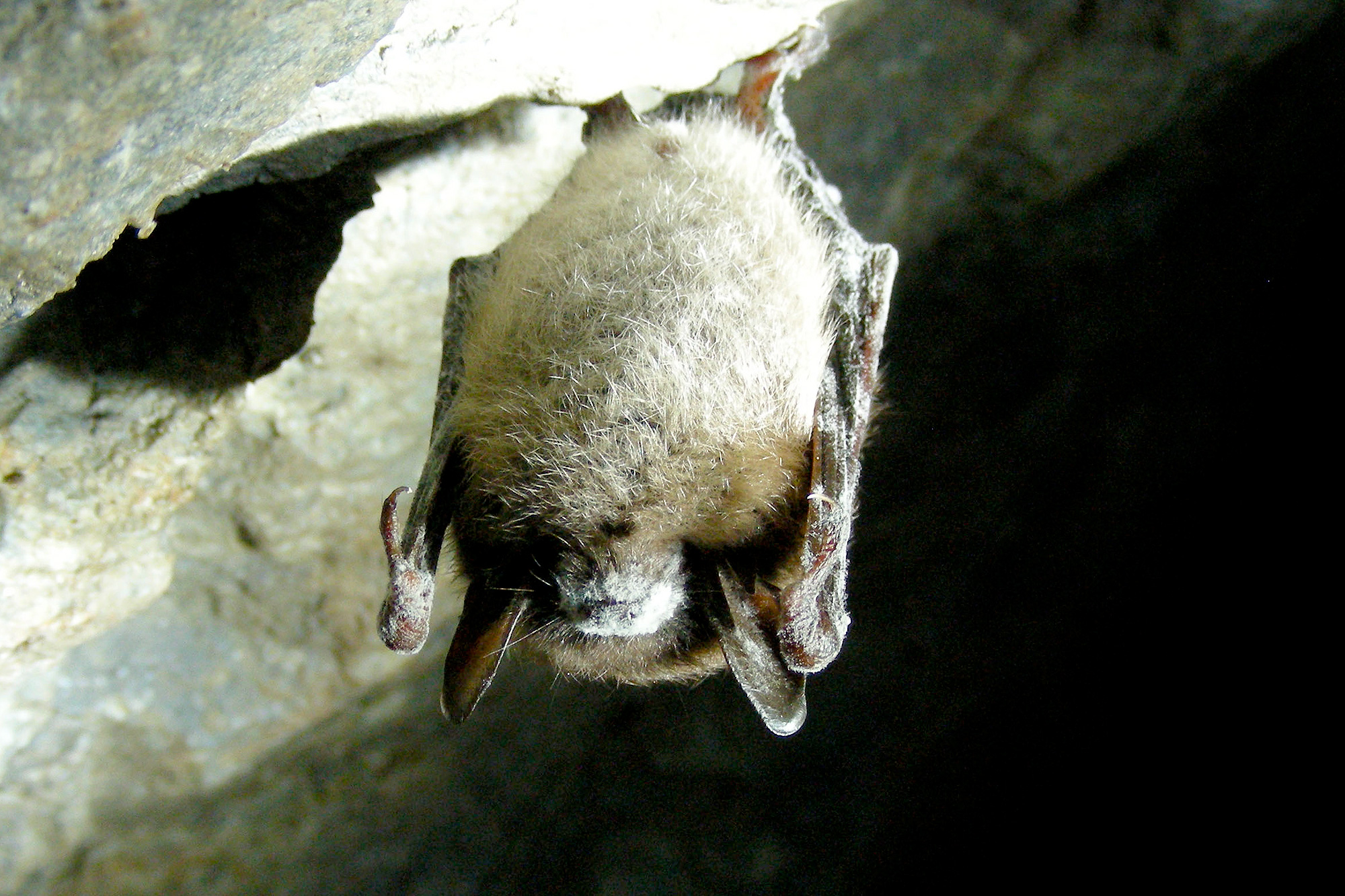 Crops, Timber May Be in Danger as Bug-Eating Bats Bite Dust