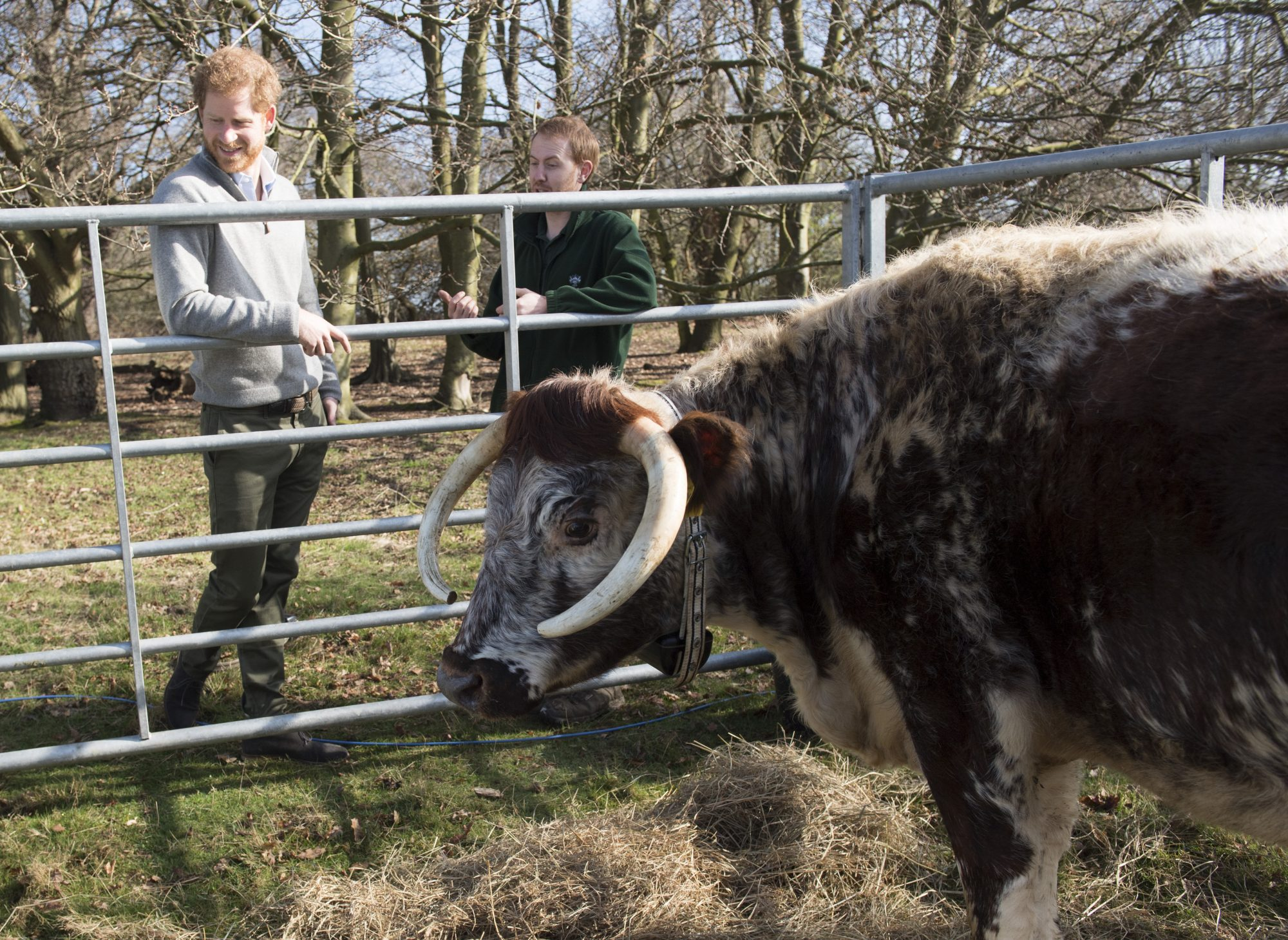 Prince Harry Visits The QCC Project In Epping Forest