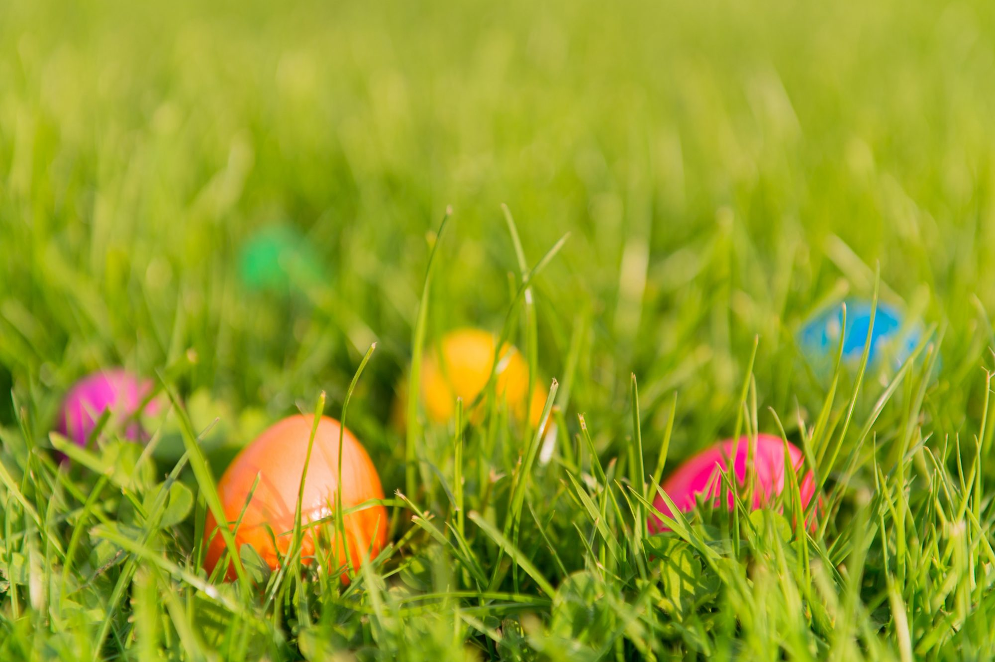 origin-of-easter-eggs-grass-spring