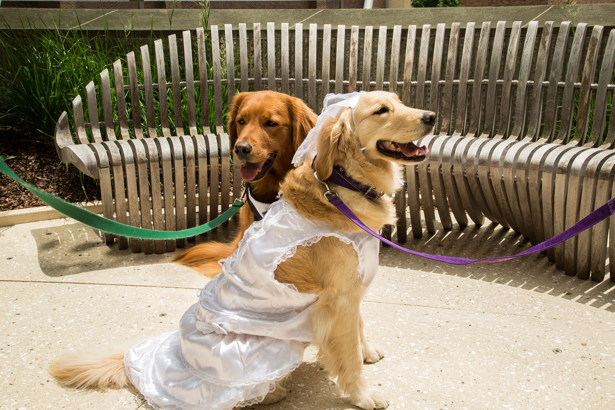 therapy-dog-wedding-1