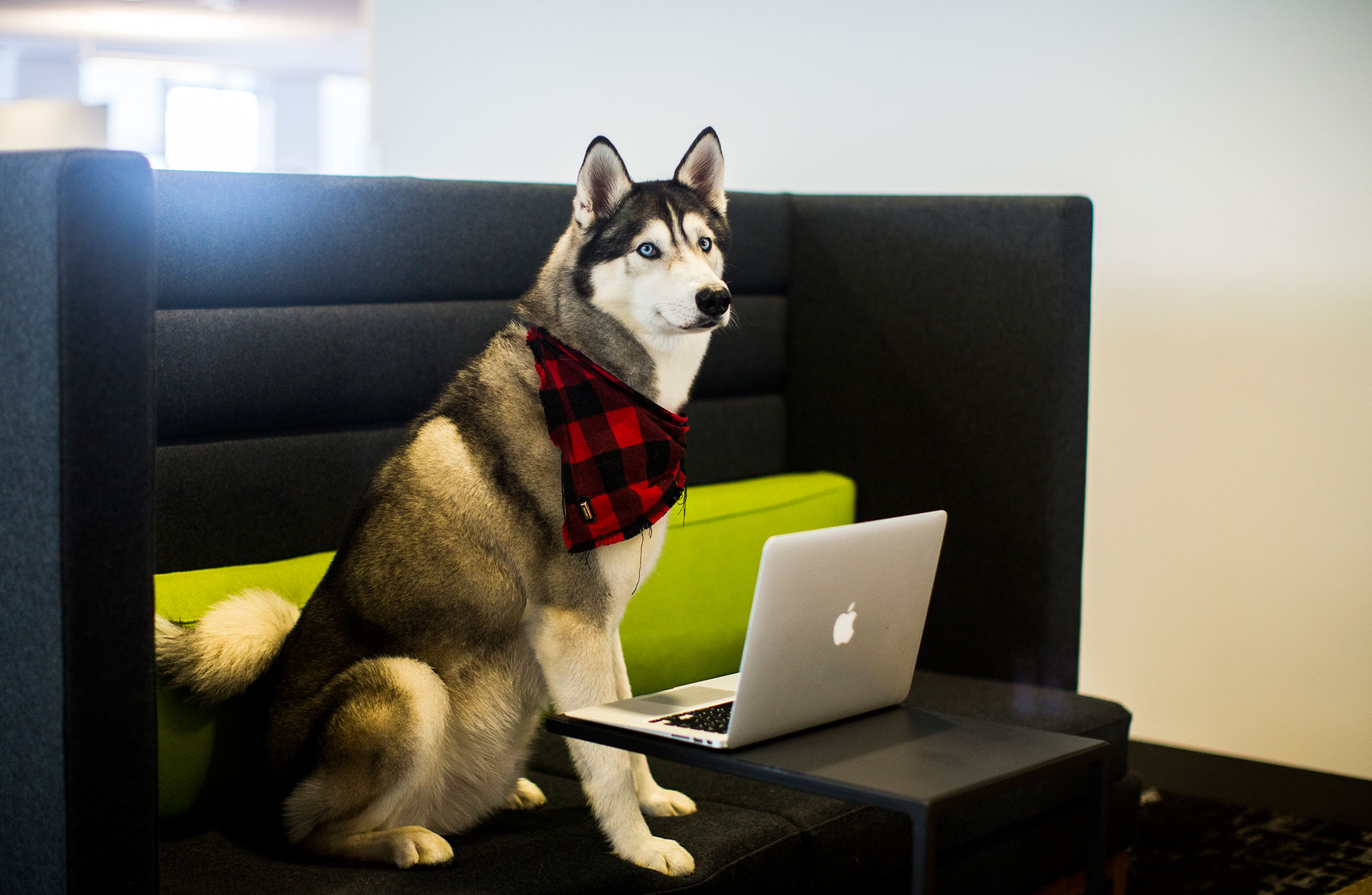 America Dog Friendly Offices