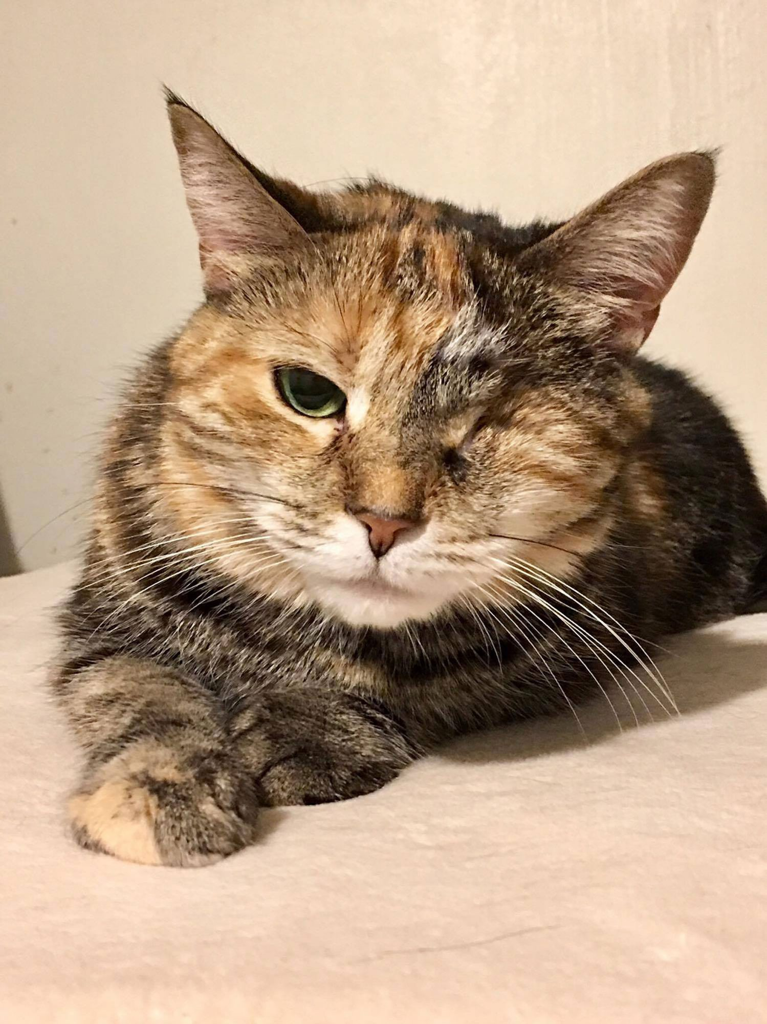 fannie-the-cat