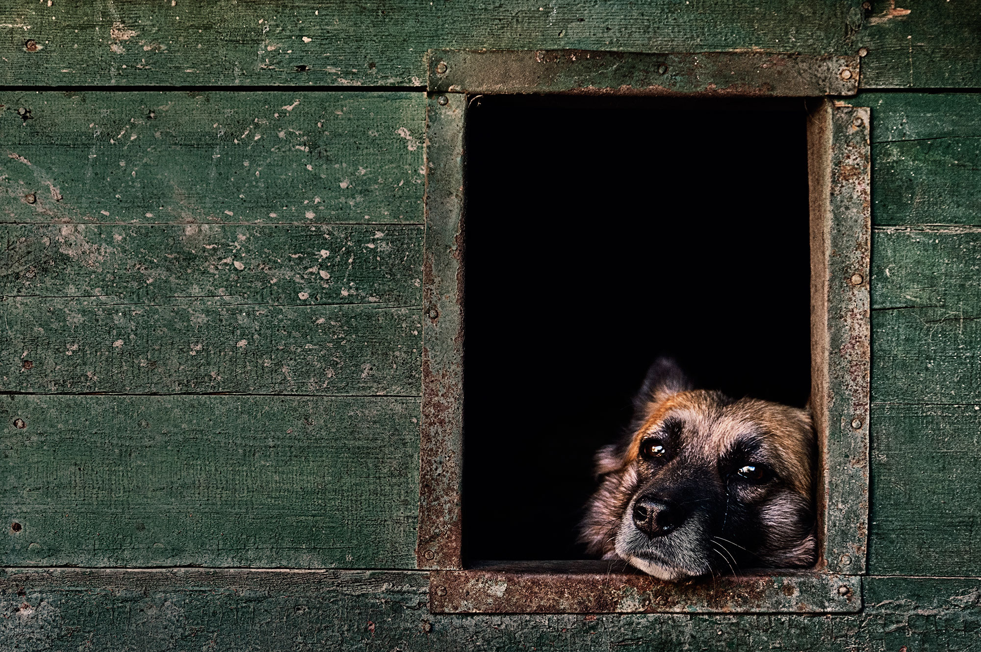 The Kennel Club Photo Contest 2nd place oldies