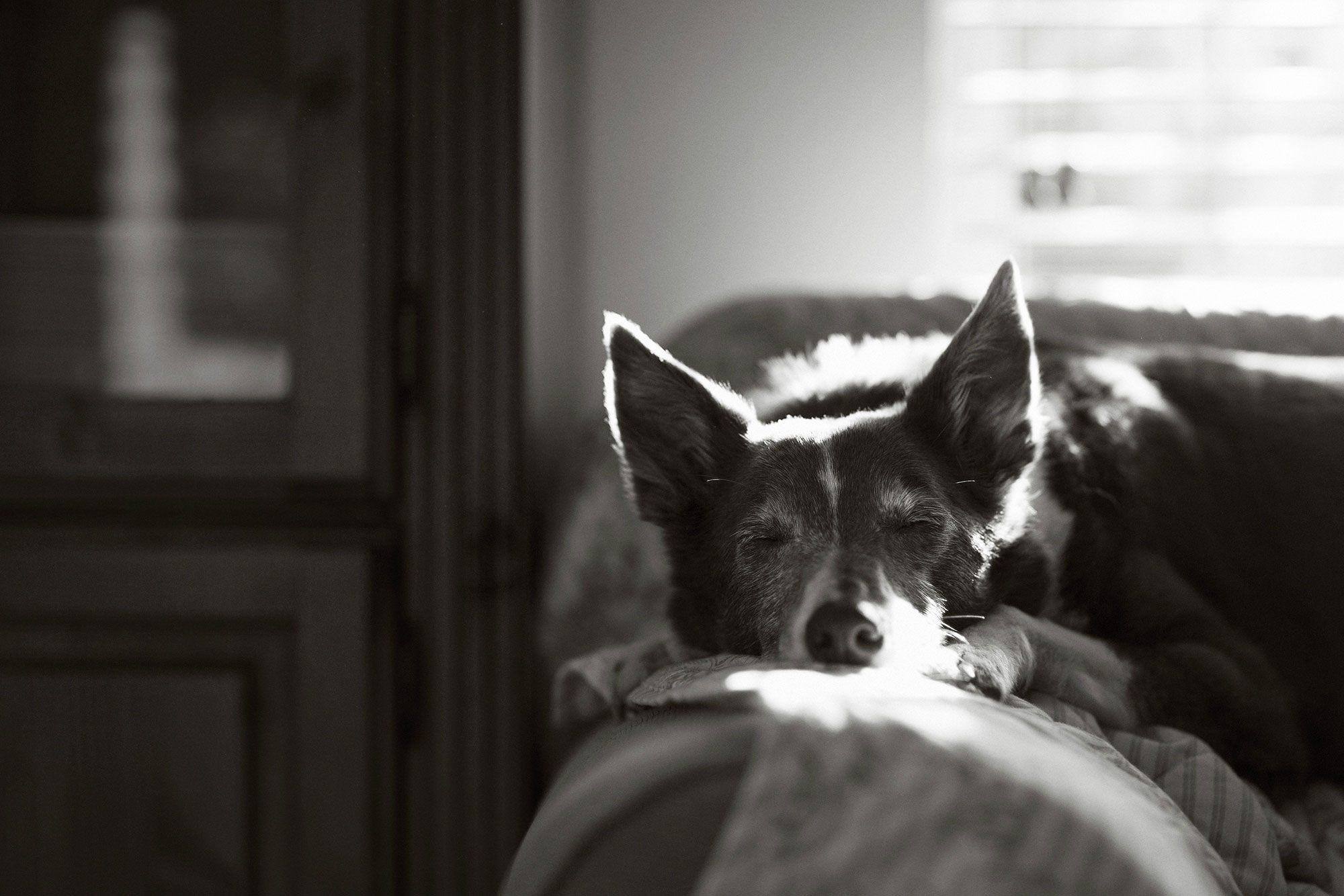 The Kennel Club Photo Contest 1st place oldies