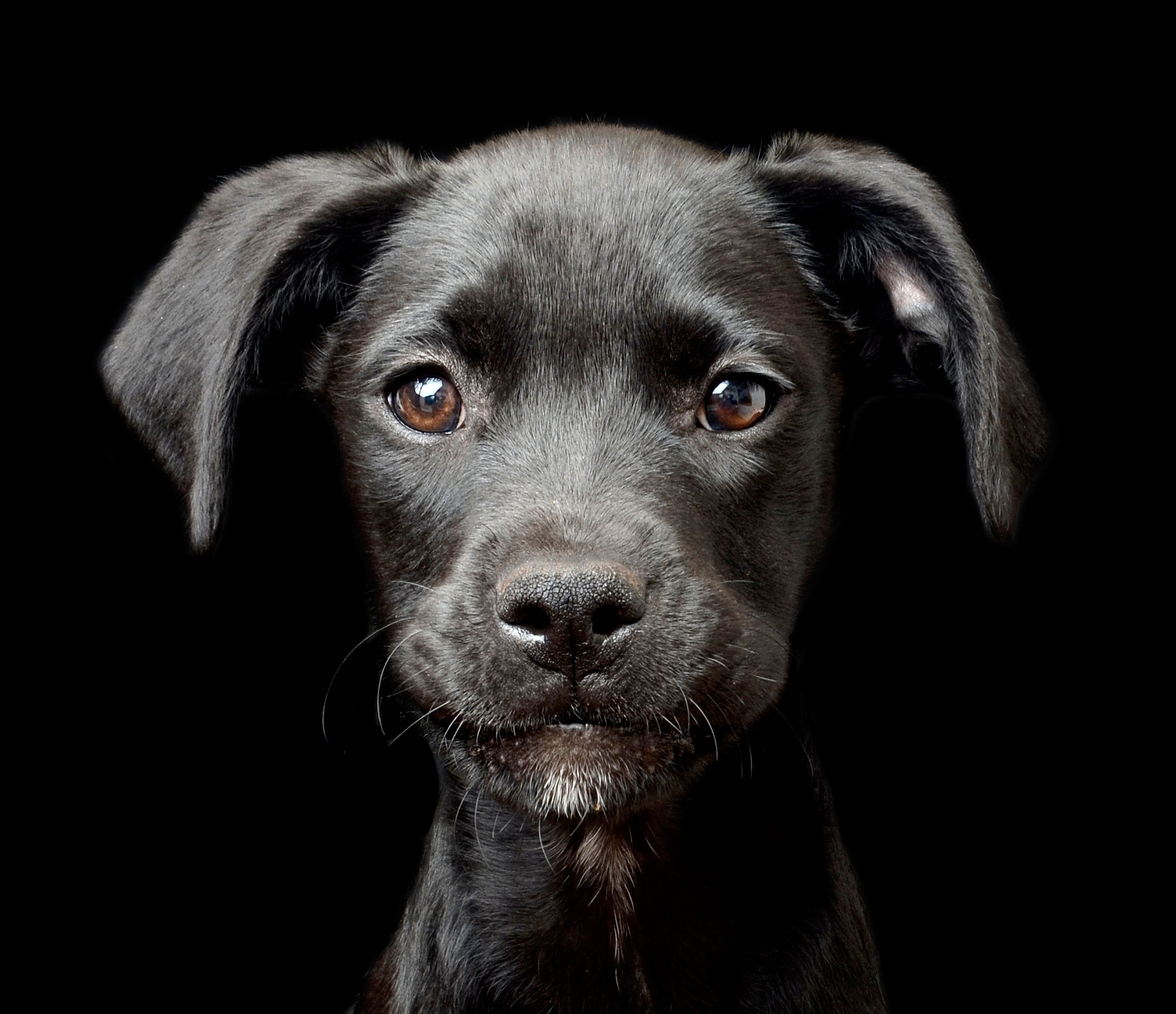 The Kennel Club Photo Contest 2nd place puppy