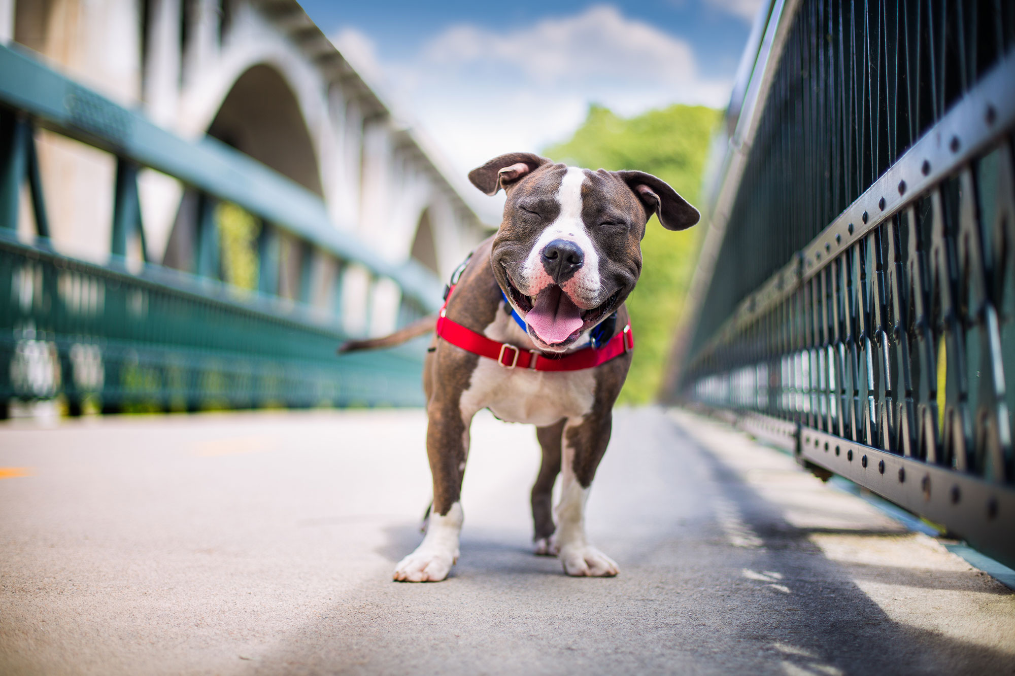 The Kennel Club Photo Contest 3rd place Rescue dog