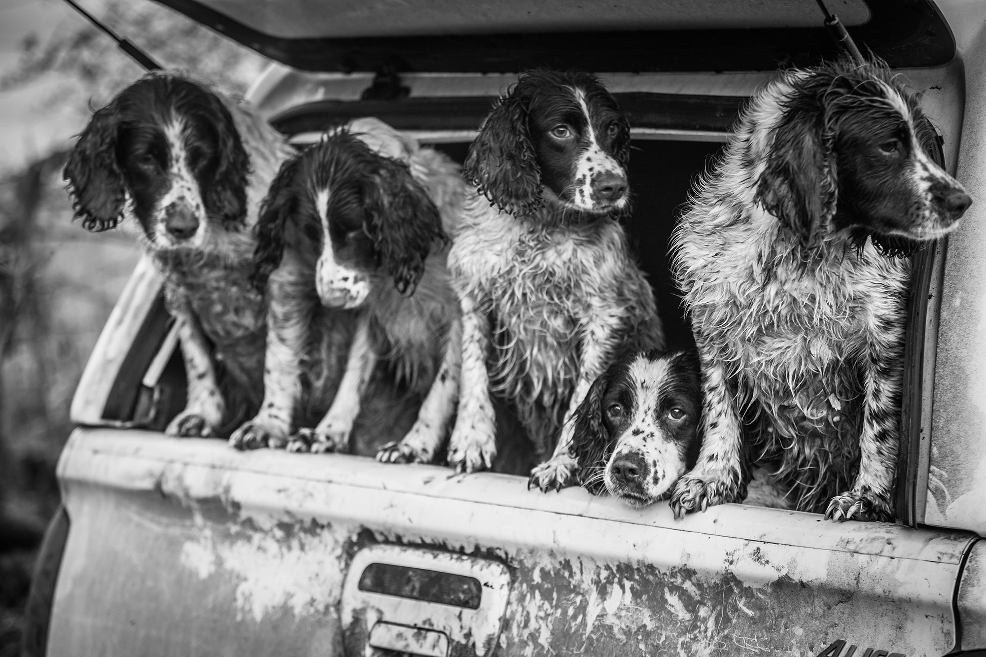 The Kennel Club Photo Contest 2nd place dogs at work