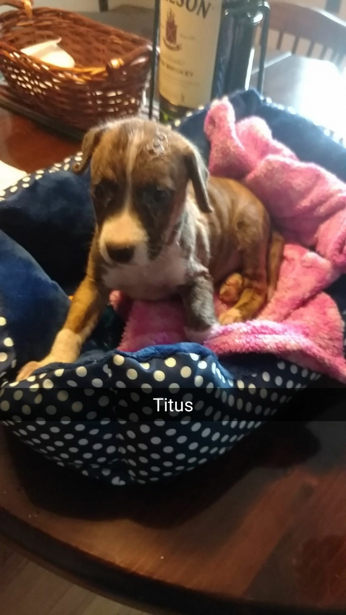 Titus - rescued dog.Credit: City of Newburgh Fire Department
