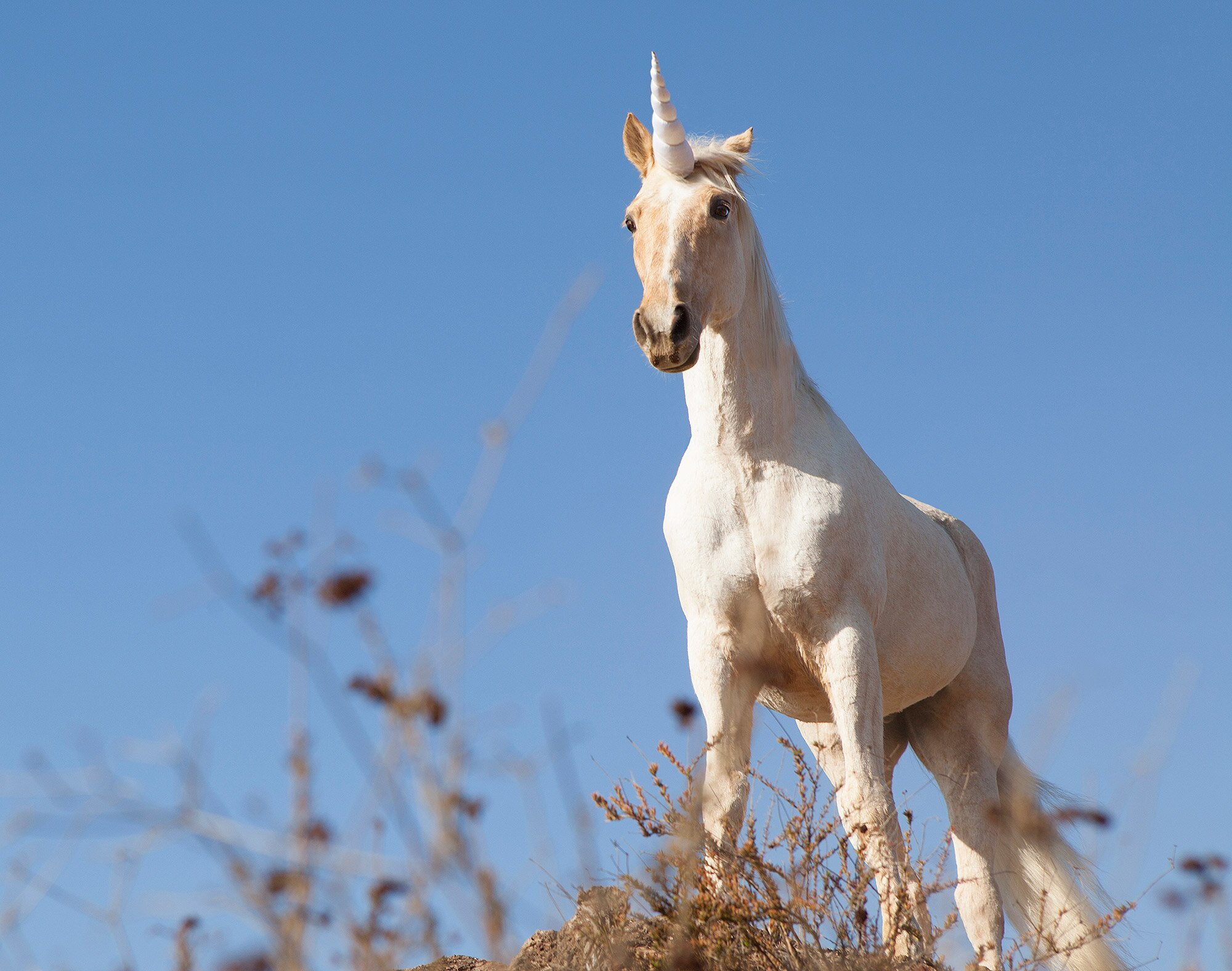 Unicorns Are Real and Lived with Humans | PEOPLE.com