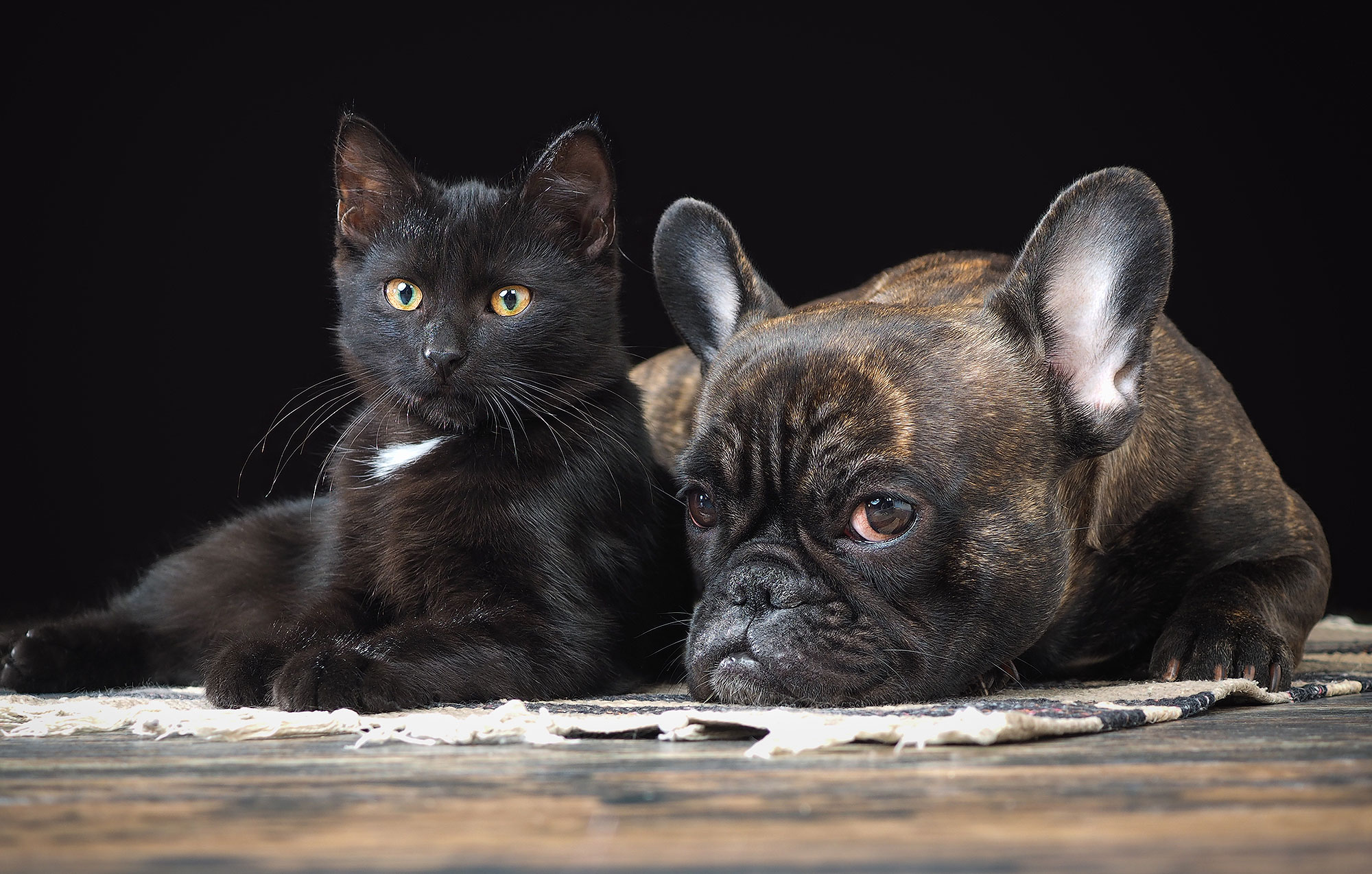 Black kitten and the dog are together