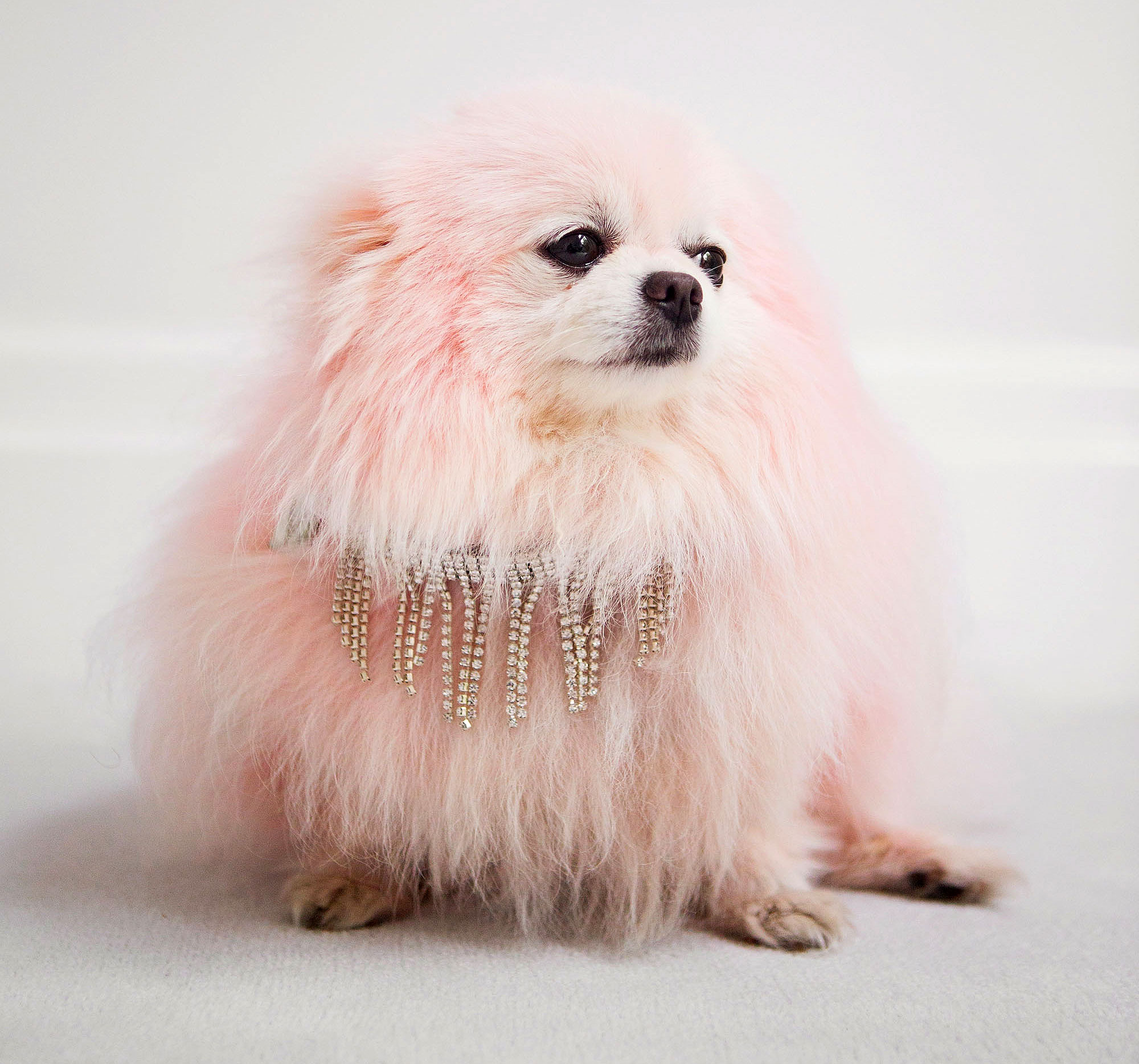 lisa-vanderpump-pink-dog-2