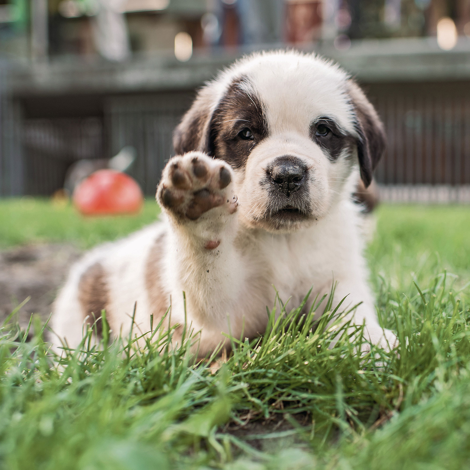 the-dogist-puppies-2