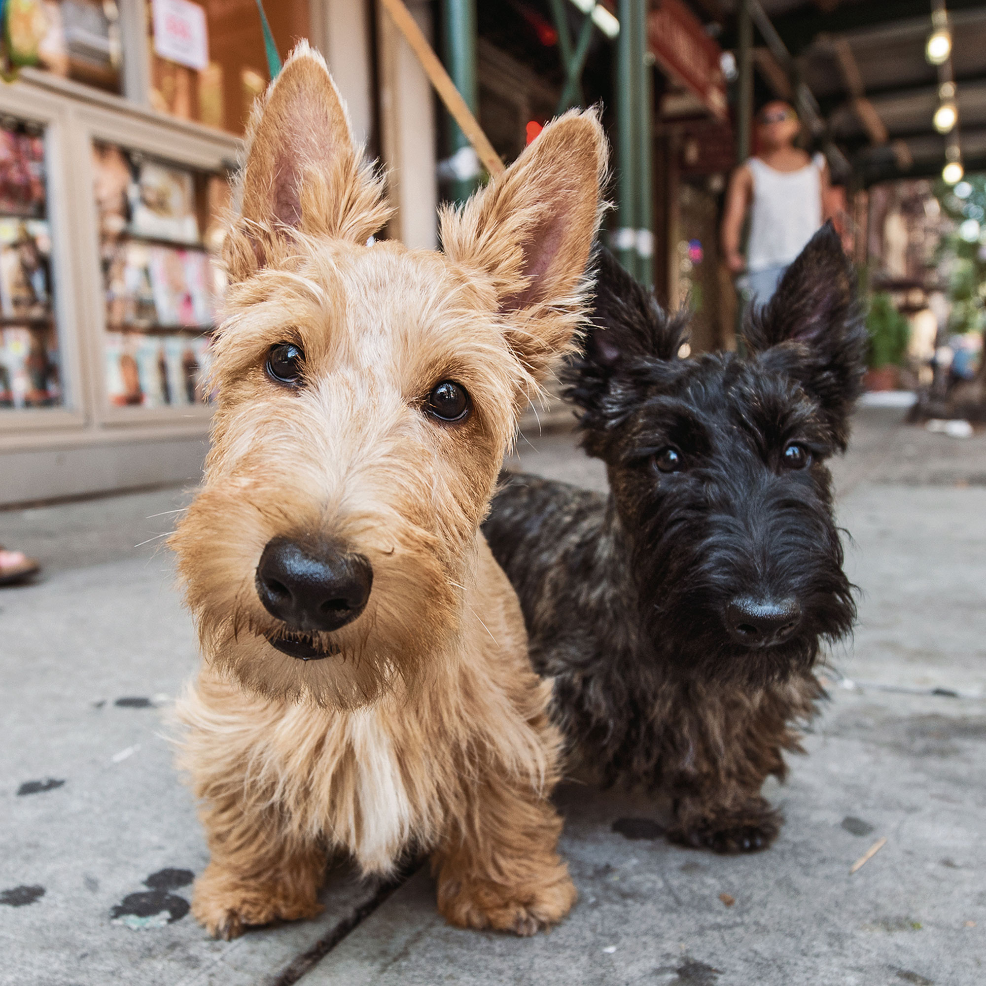 the-dogist-puppies-6