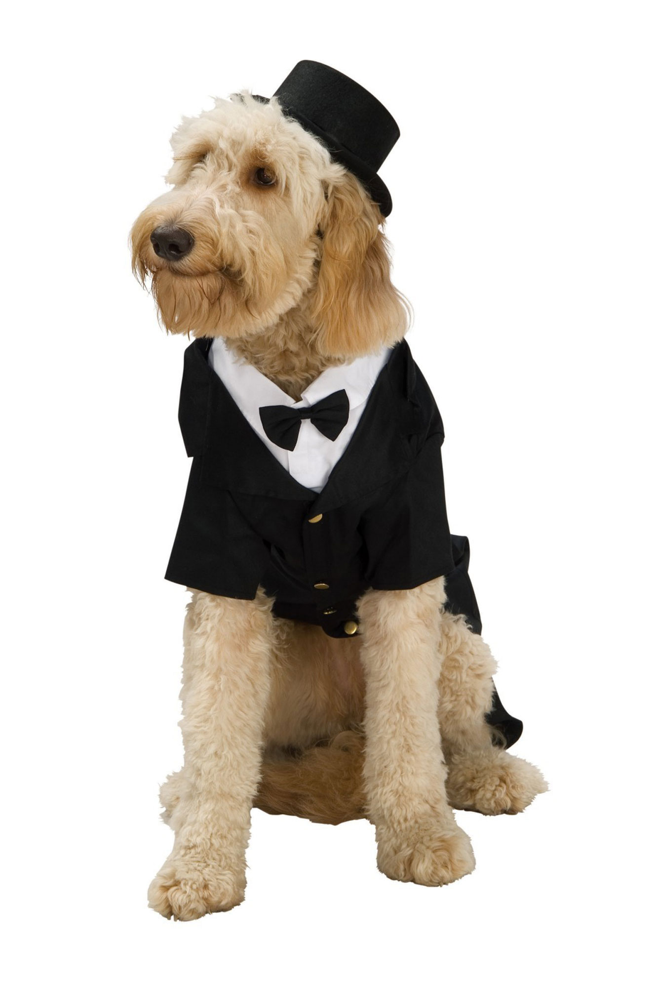 dapper-dog-2000A