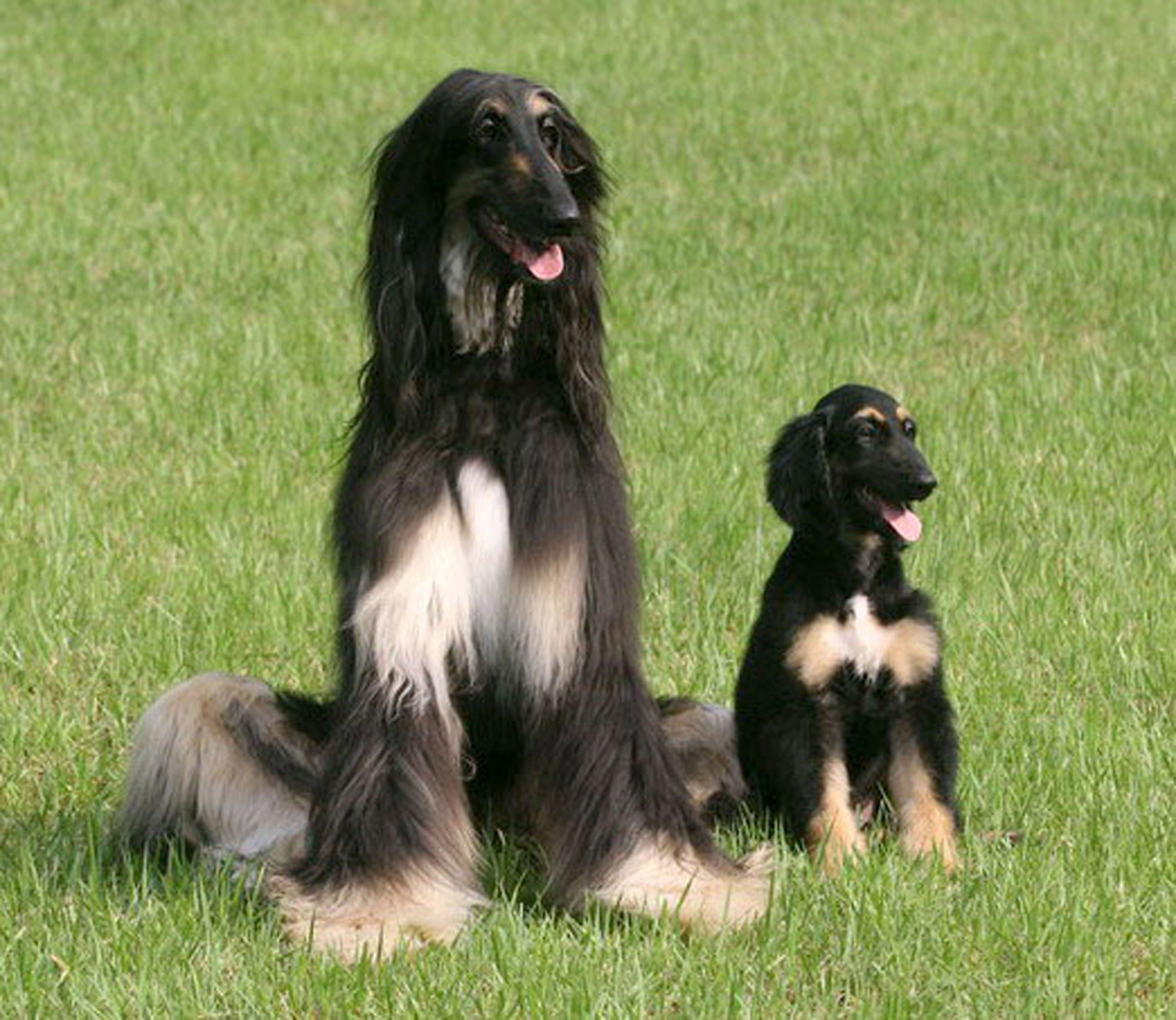Scientists Announce World's First Cloned Dog
