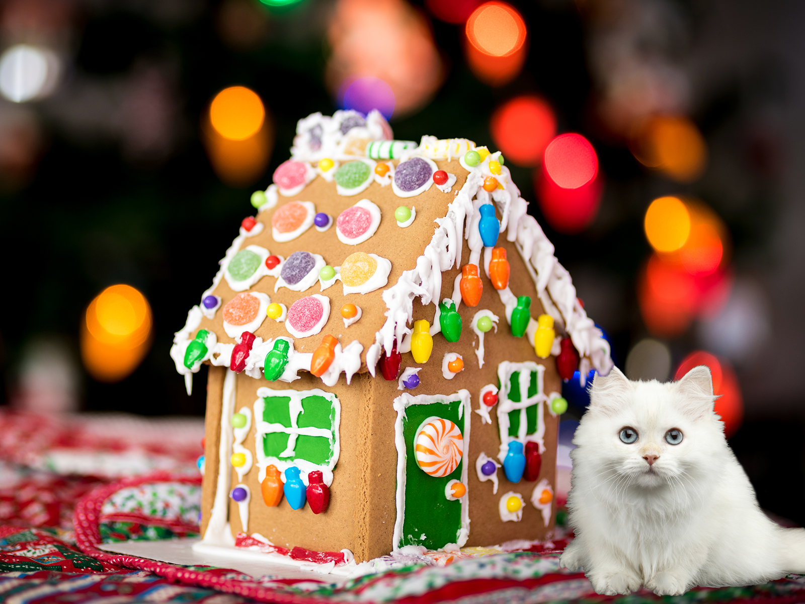 Christmas lights and a Gingerbread house